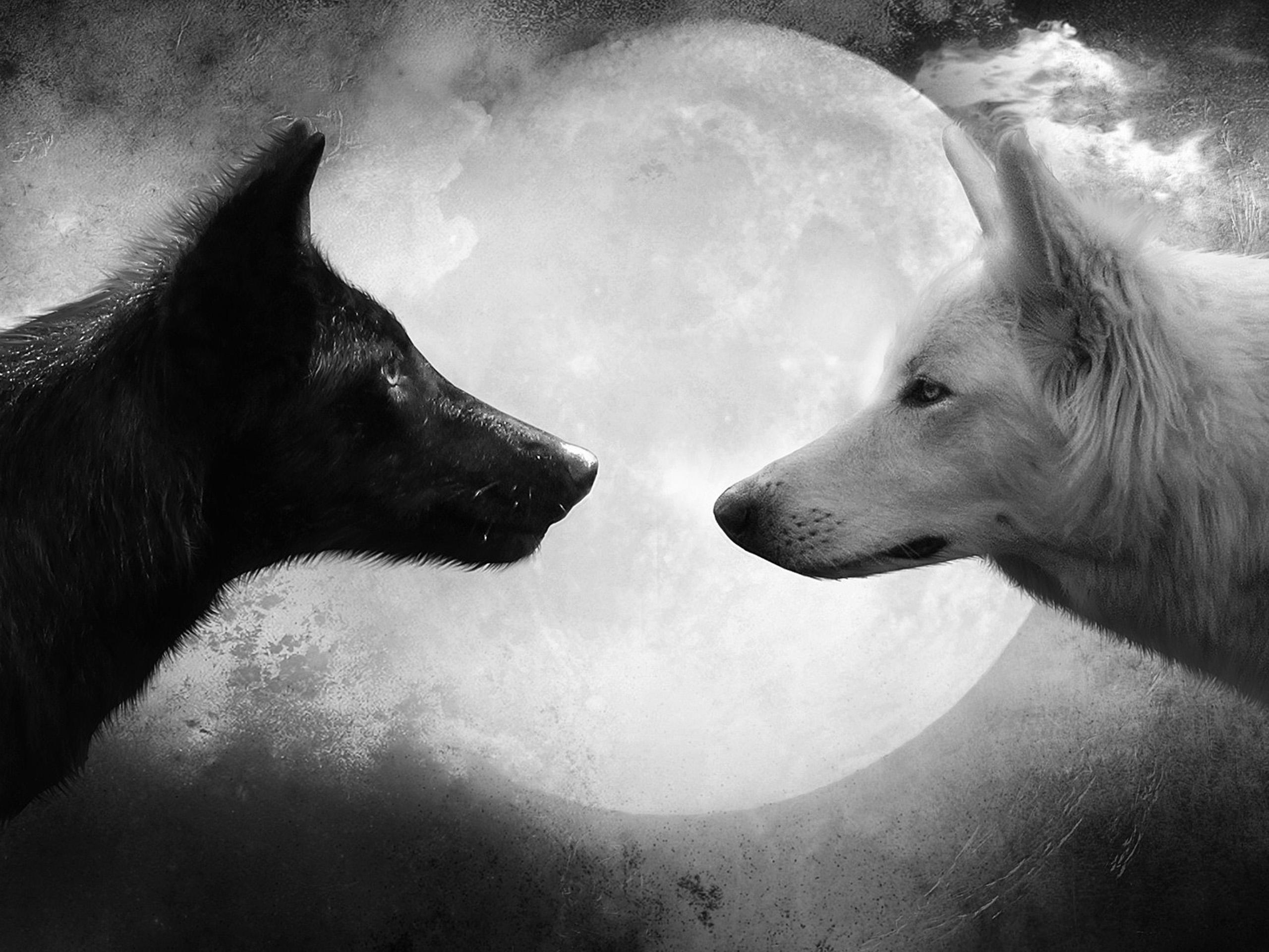отдыхать волк черный и белый картинки совершенно