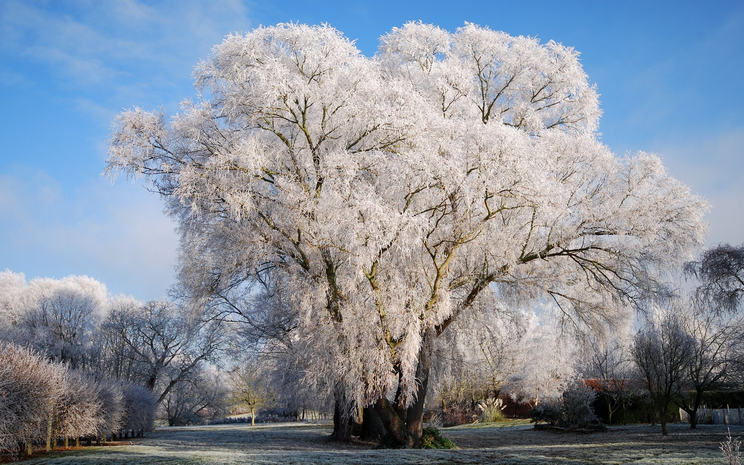 Деревья в инее  № 1191680 загрузить