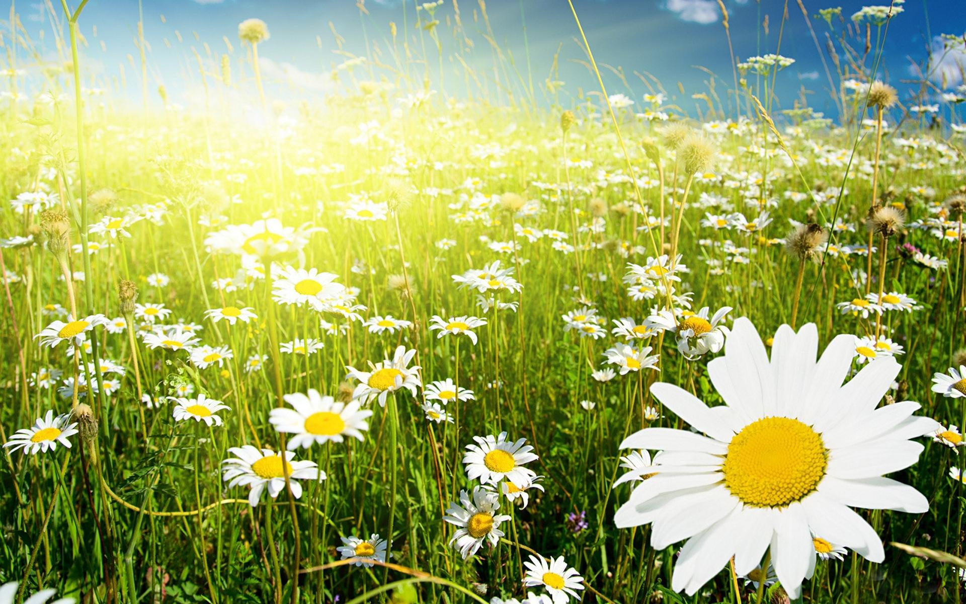 фото лето цветы и солнце текст родном языке