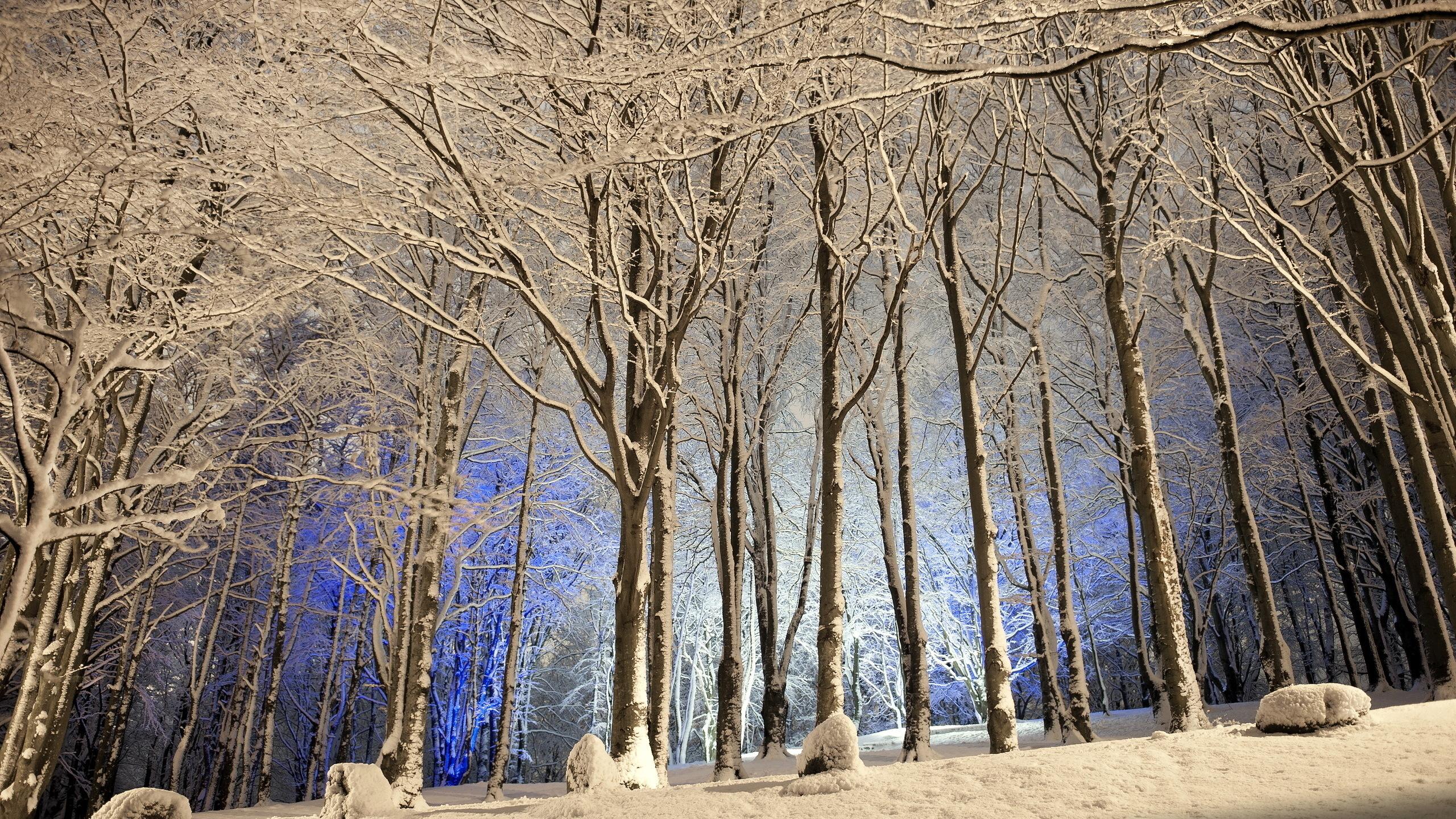 картинка лес зима деревья тому