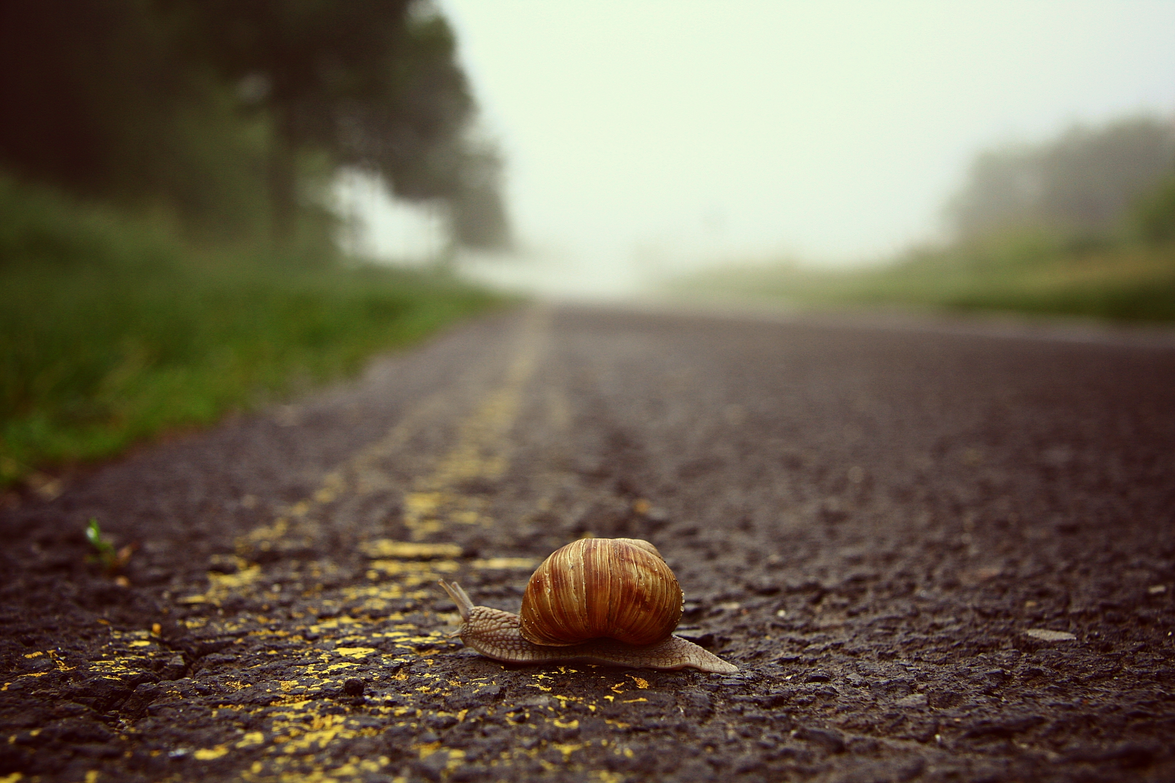 дорога макро  № 1494787 без смс