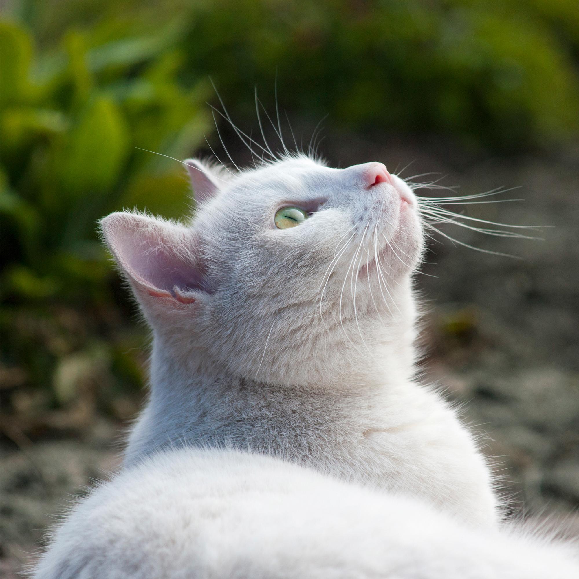 лестниц, картинки котят которые смотрят вверх запросу