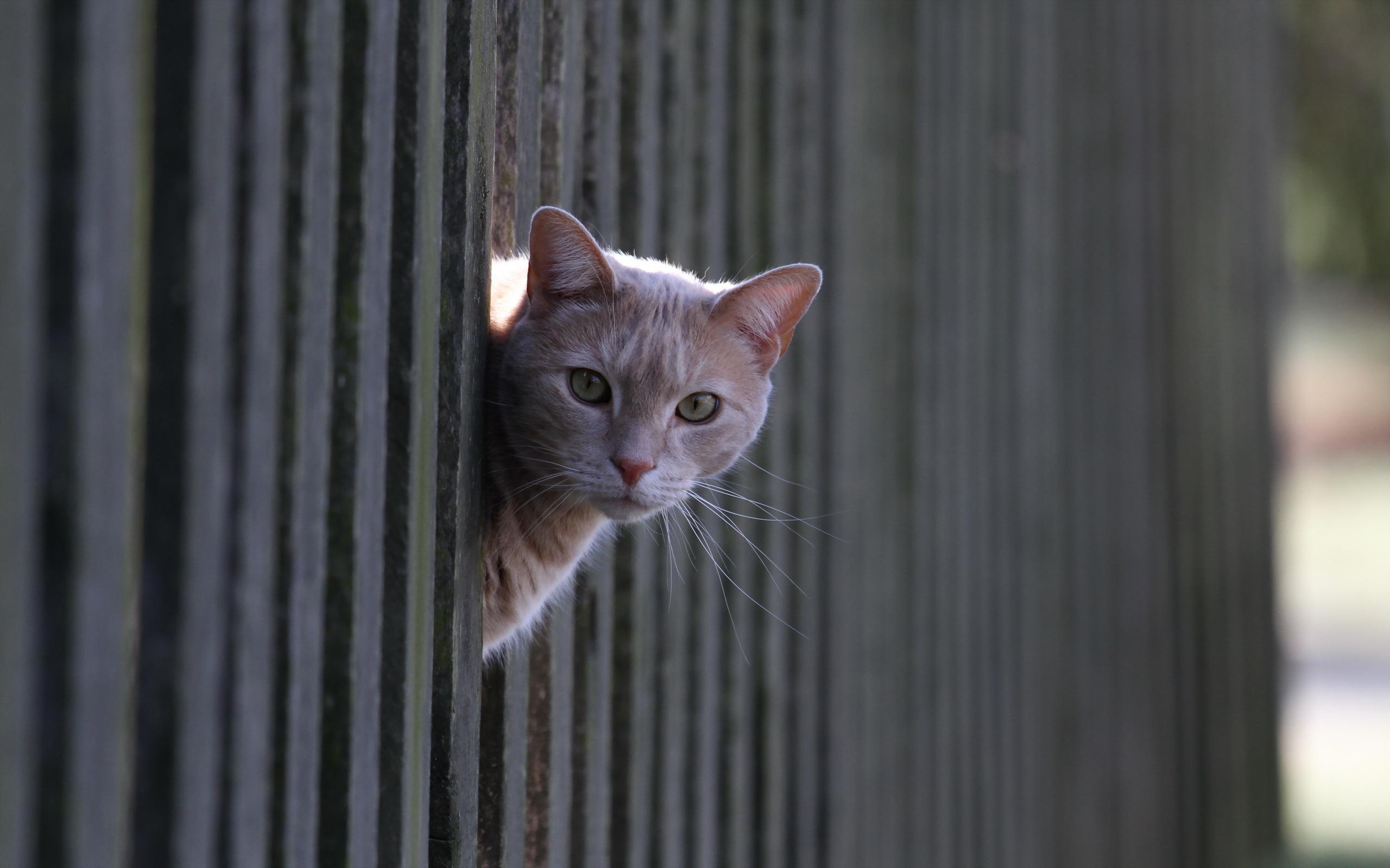 Кот забор под забором бесплатно