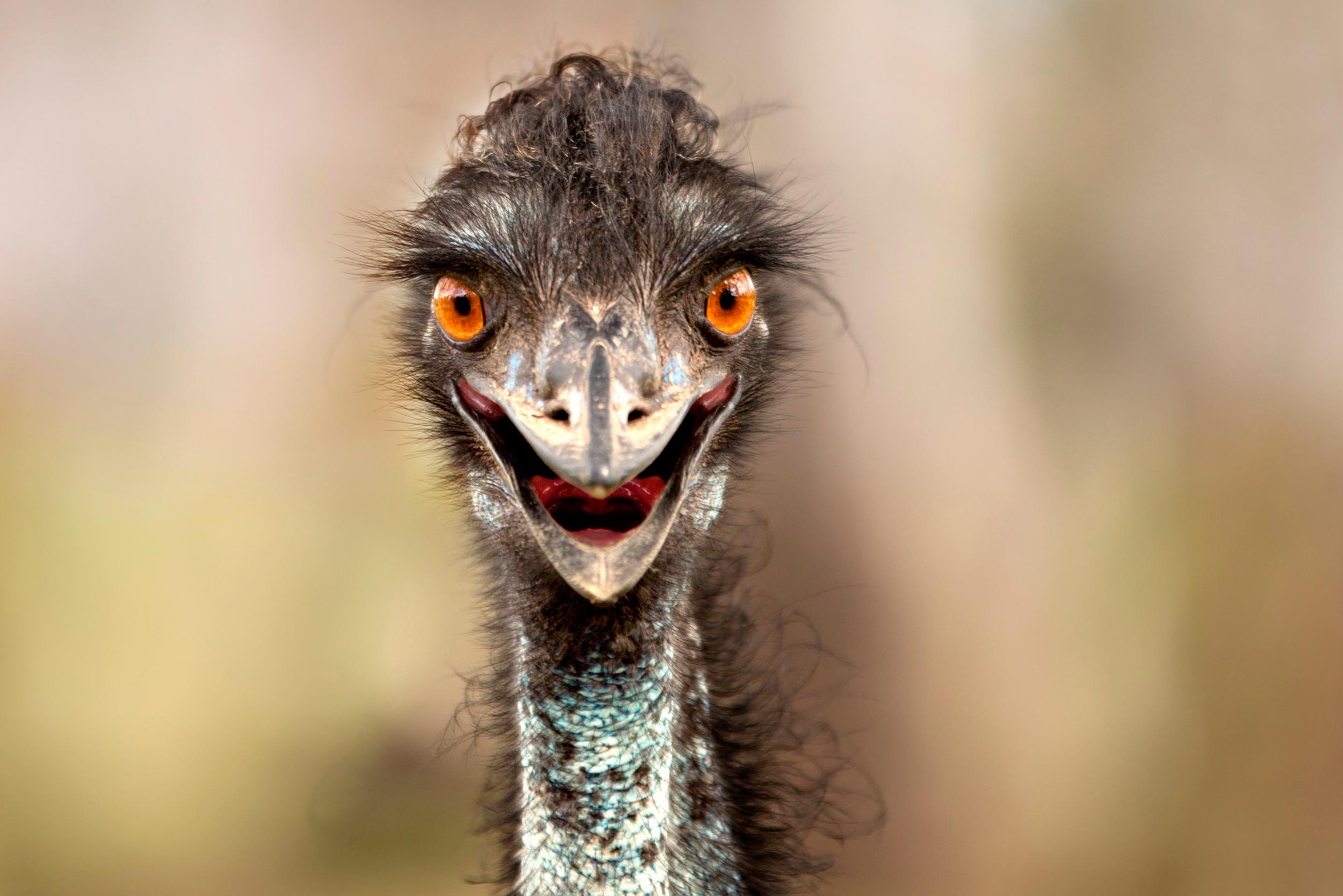 основном, приколы тупые взгляды птиц фото для