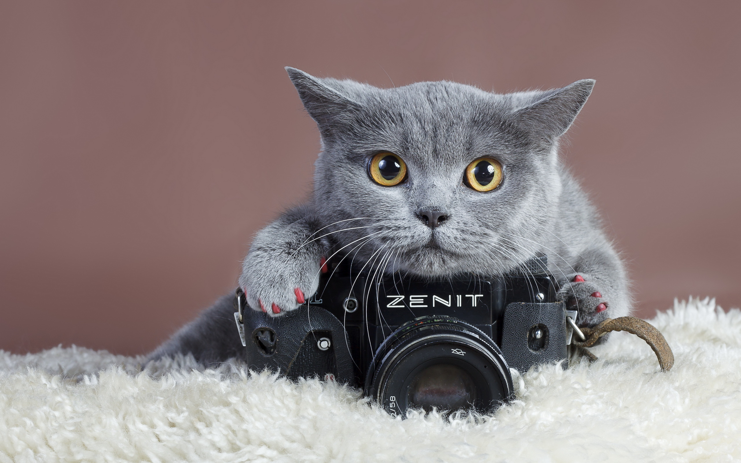 Прикольные картинки с кошками на аву