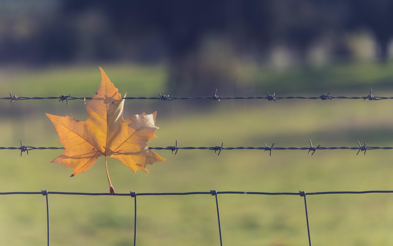 Колючая проволка на заборе  № 1701898 загрузить