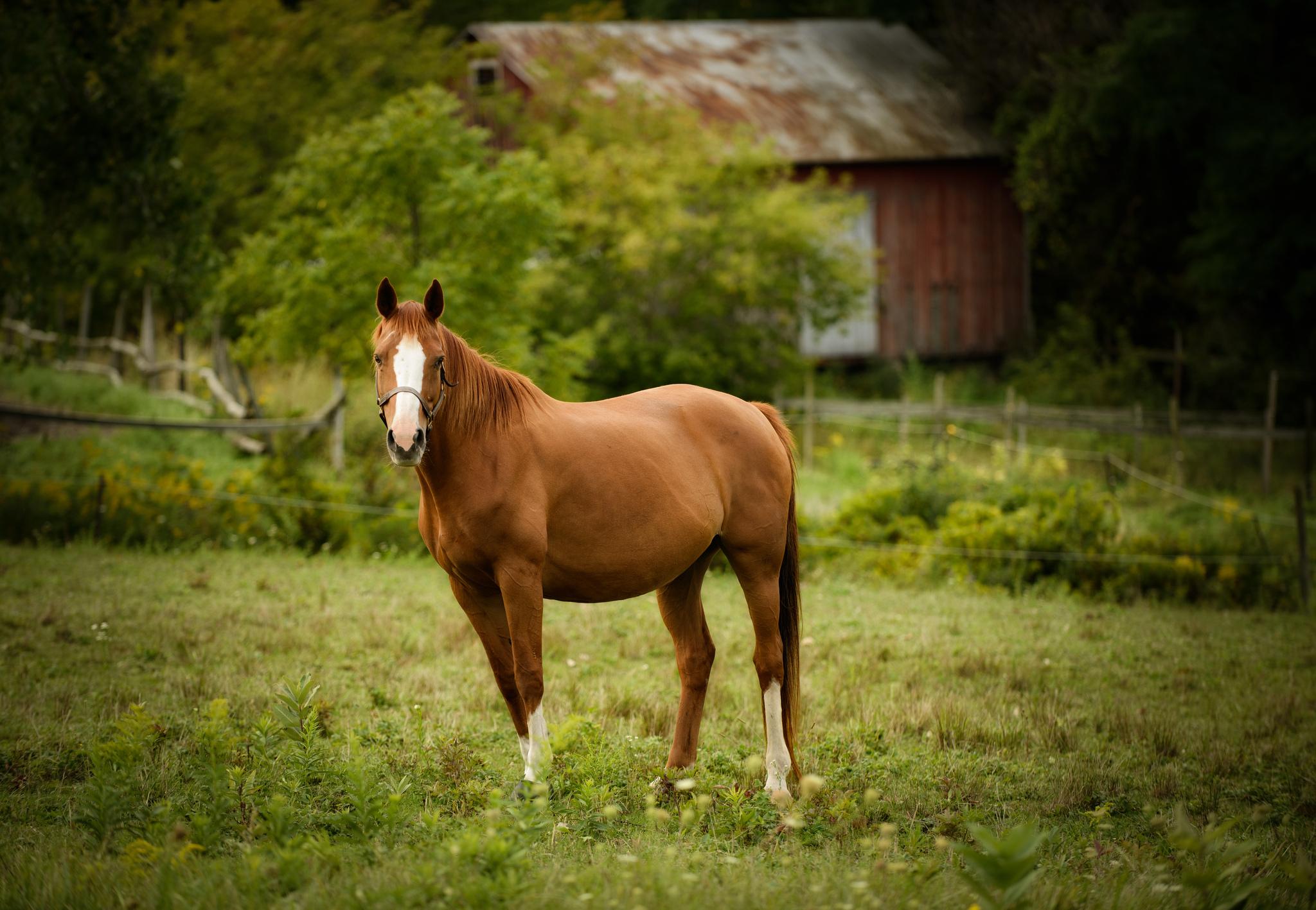 Пастбище лошадей загрузить