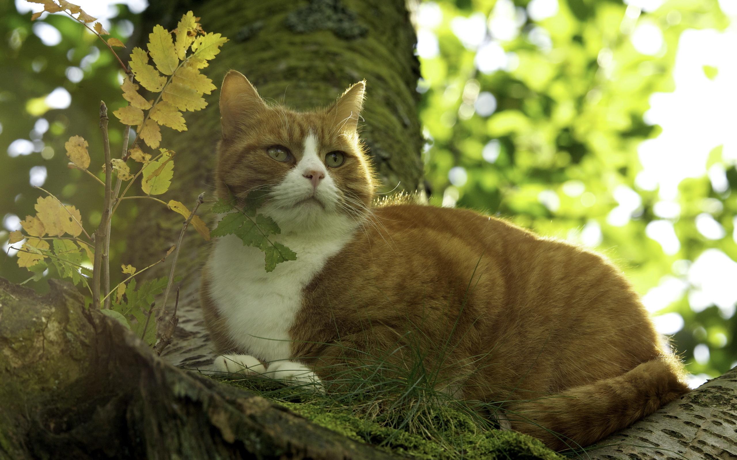 котенок природа скачать