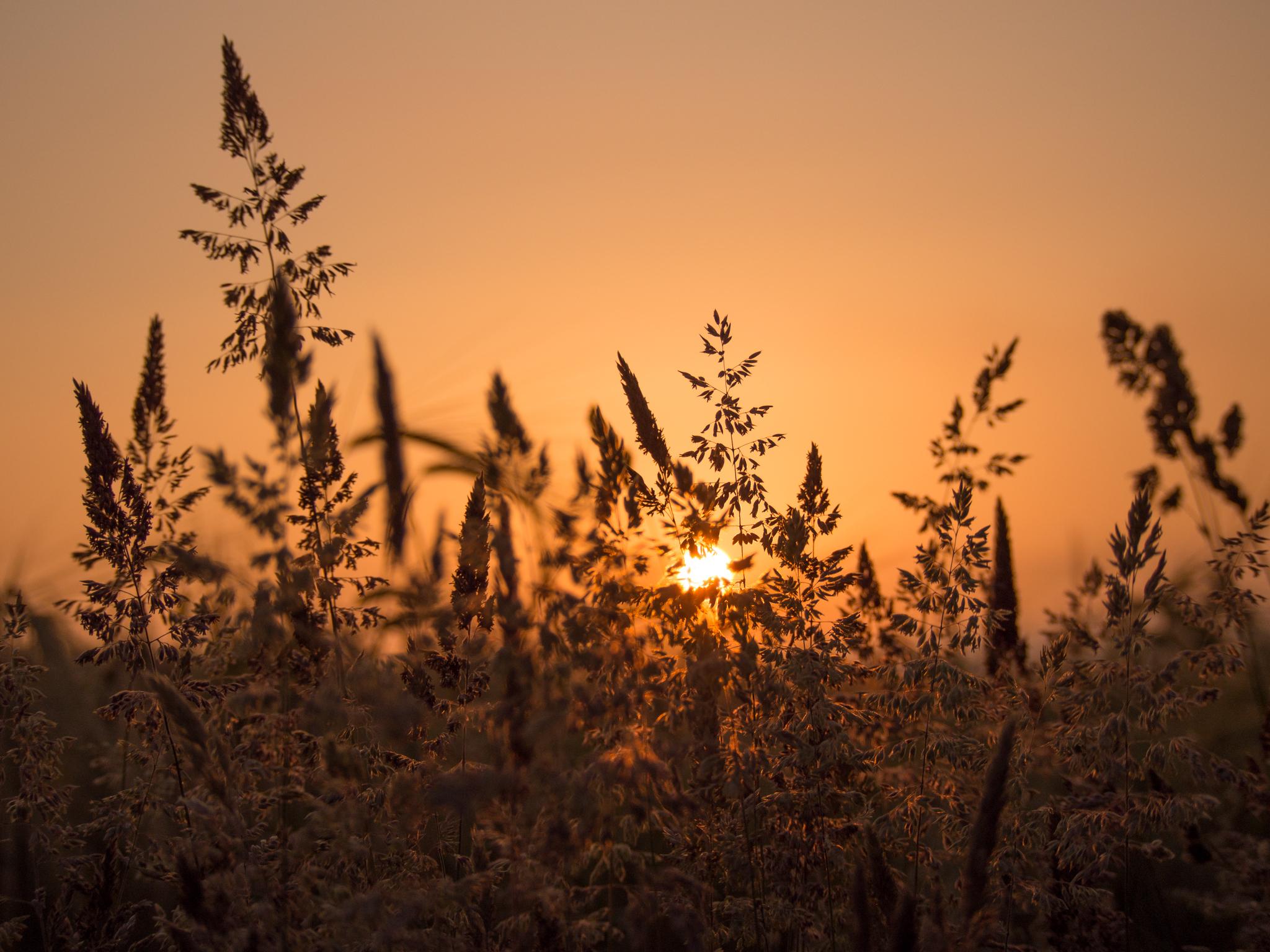 природа цветы трава мельниц восход солнце  № 2556675  скачать