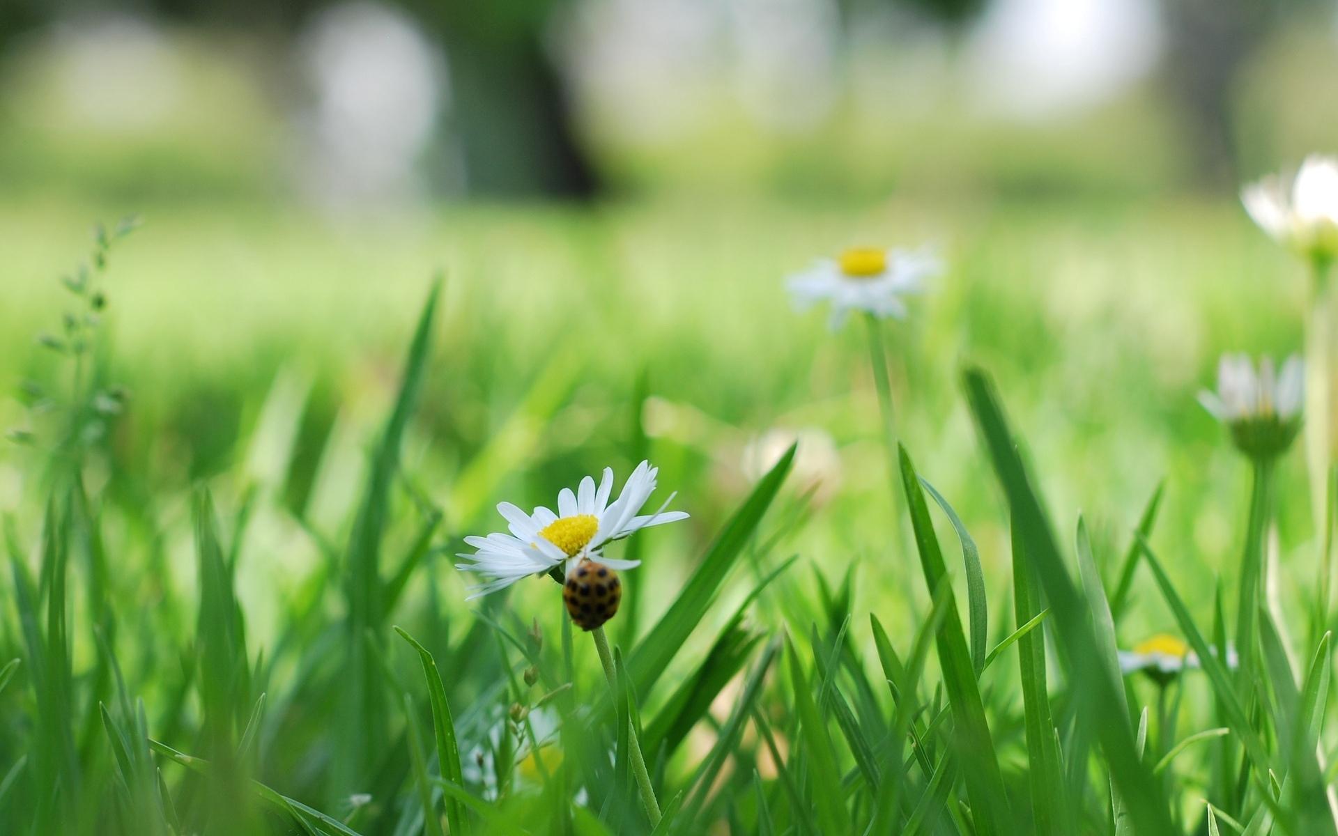 фото цветов в траве интерьерная