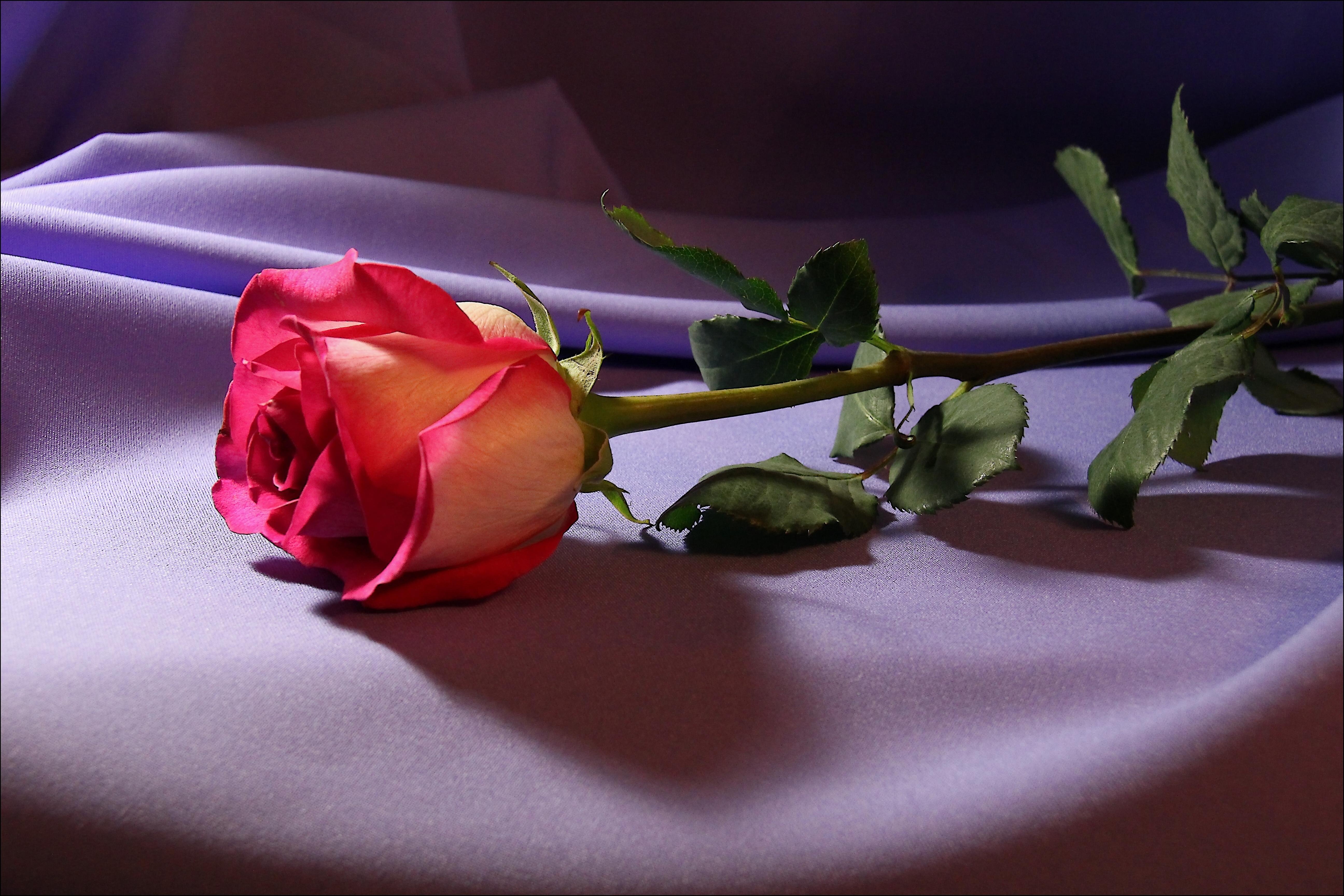 Смешные картинки, открытка цветы я тебя люблю