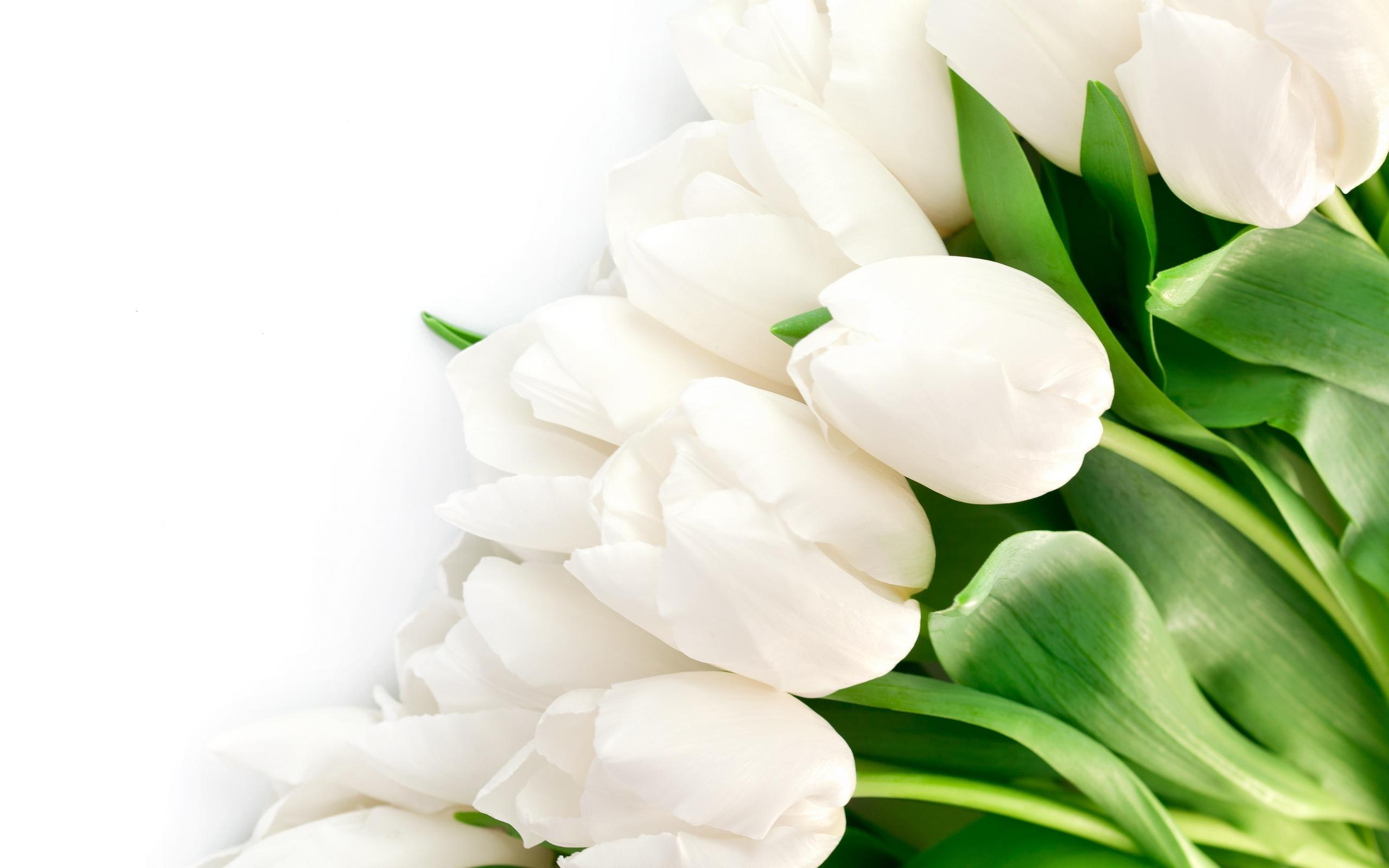 букет,тюльпаны,листья  № 415688 без смс