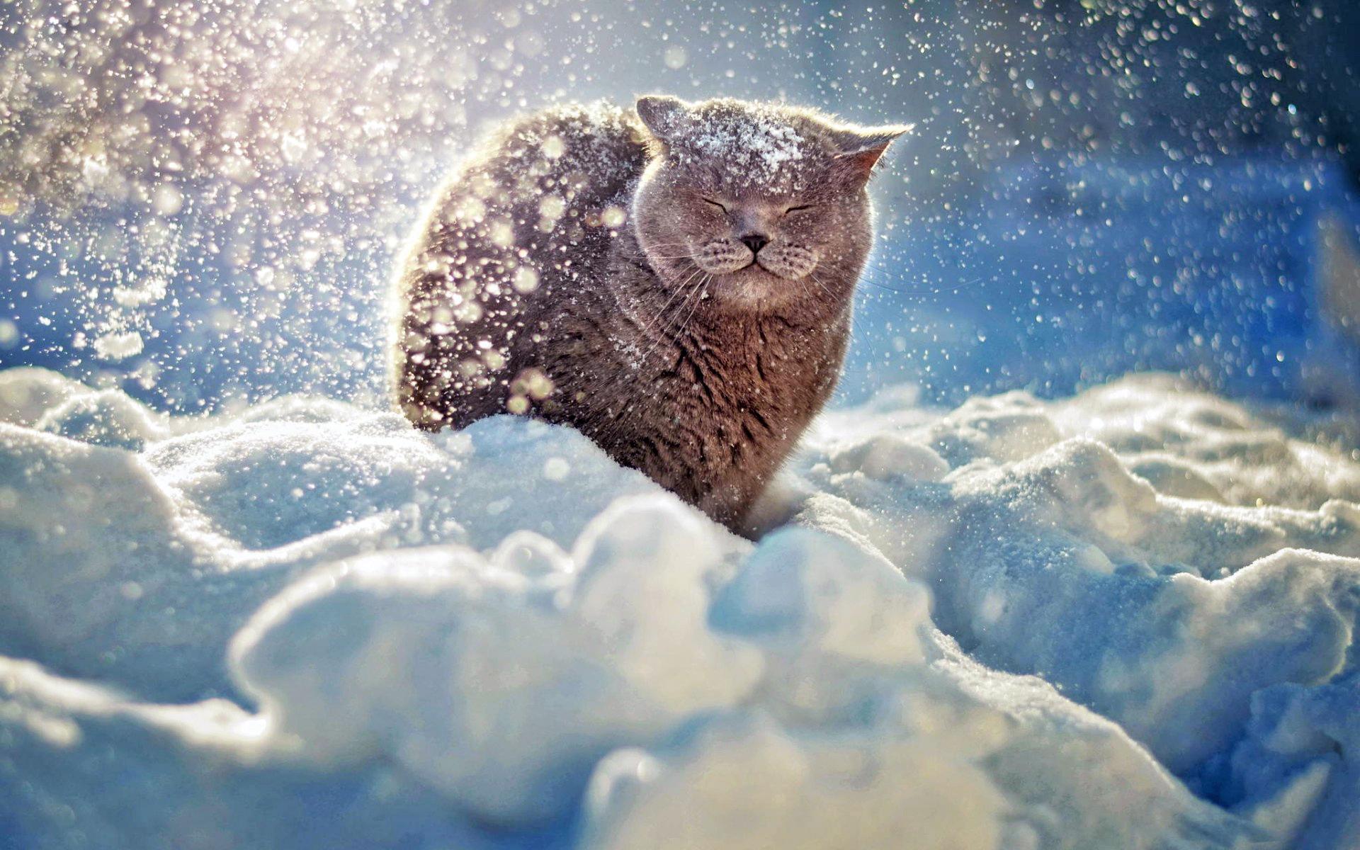 Зима картинки приколы