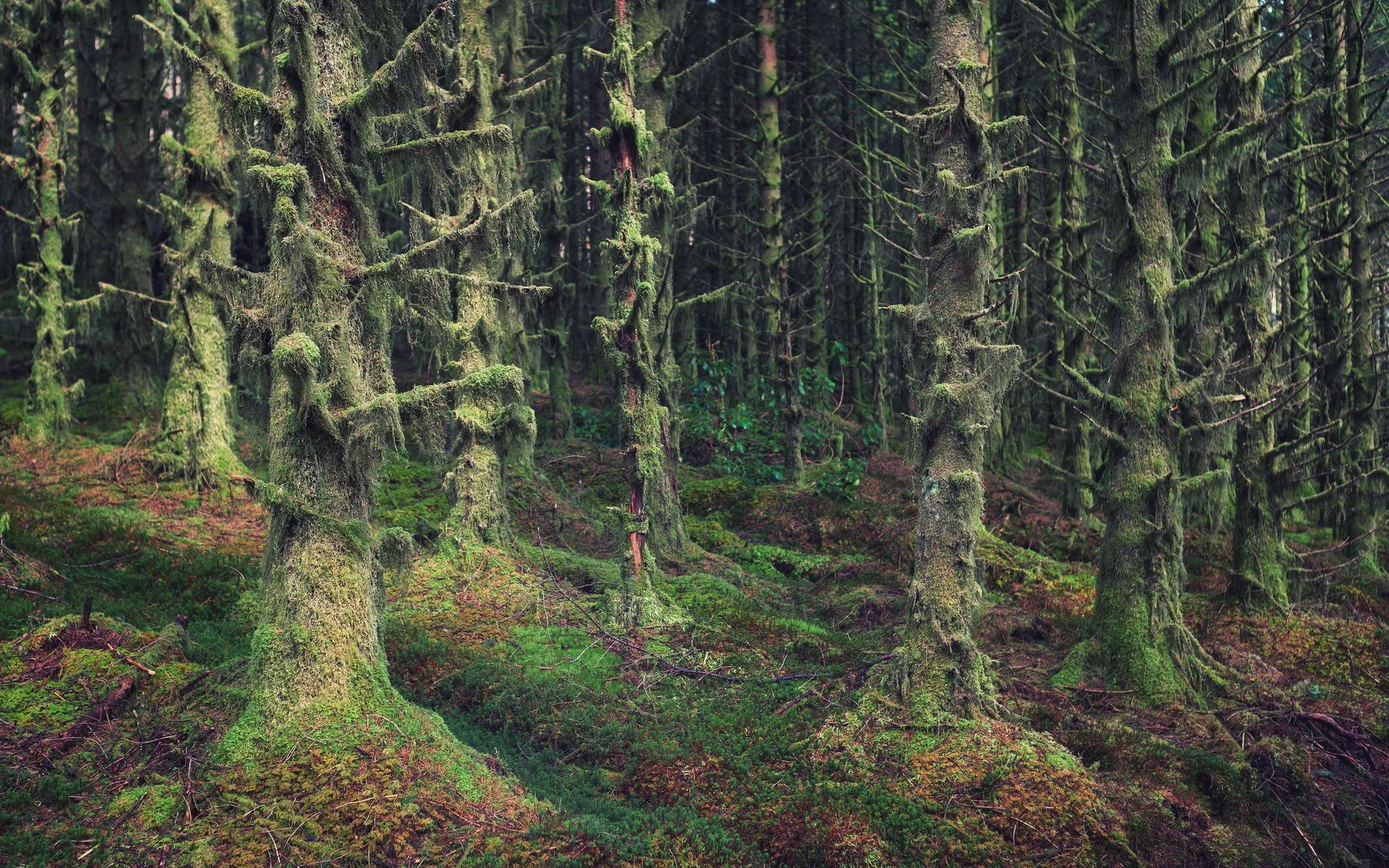 Леса Шотландии без смс