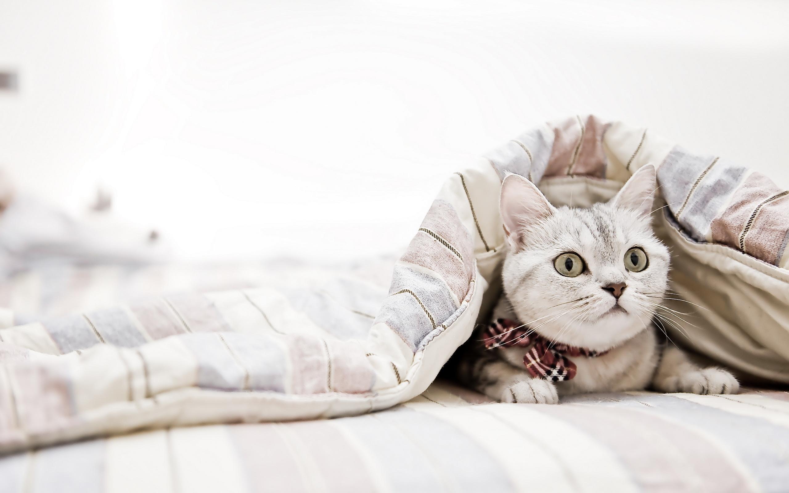 котенок под кроватью скачать