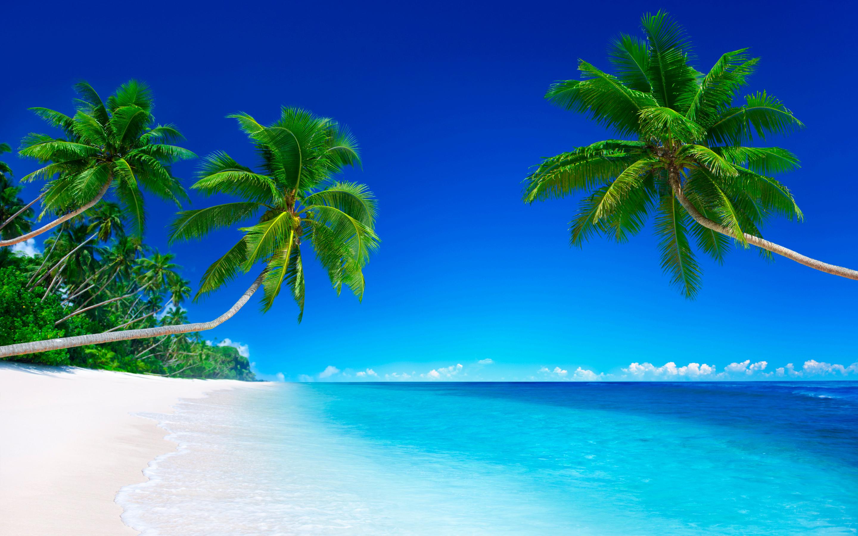 рассматривала фотографии картинка море с пальмами большого разрешения народные избранники, мэр