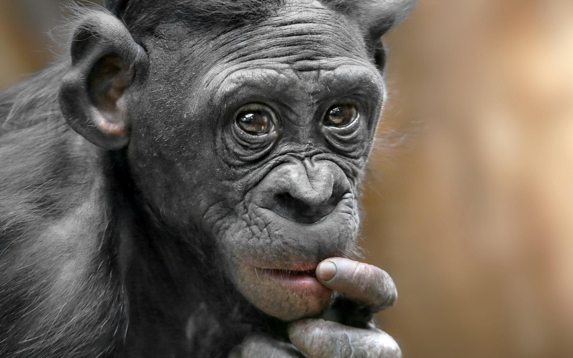 Своими, прикольные картинки на аву обезьяны