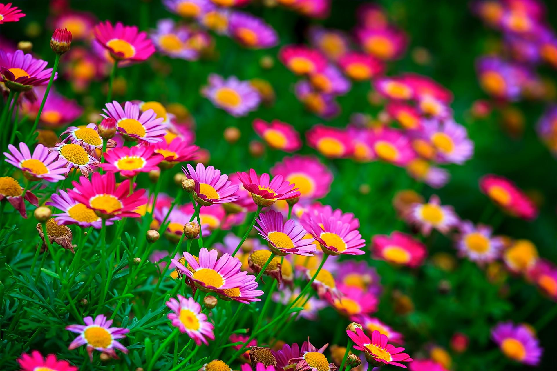 Красивые картинки яркие летние