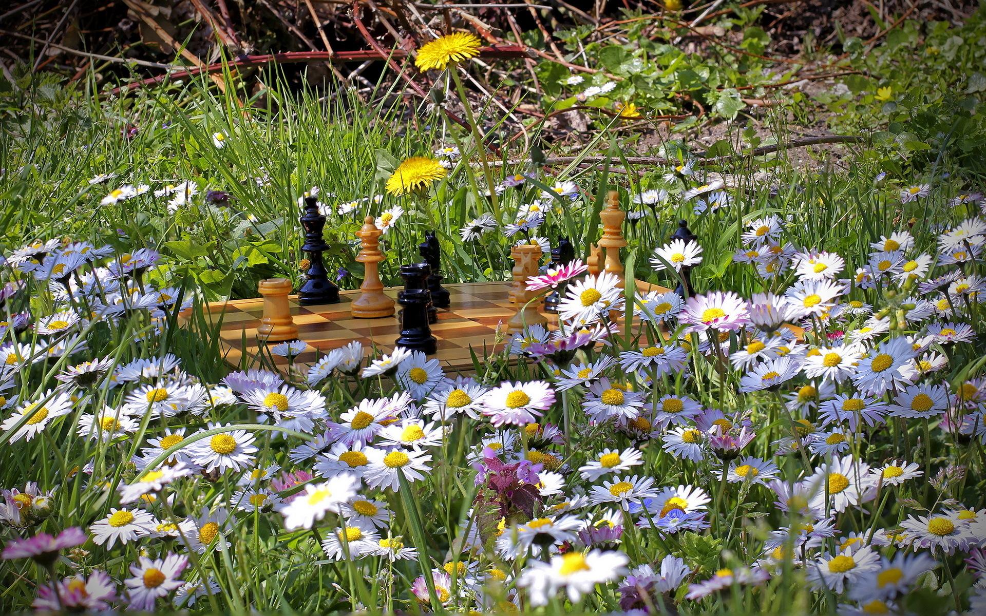 обои на рабочий стол лето вода природа лес цветы ромашки № 1962  скачать