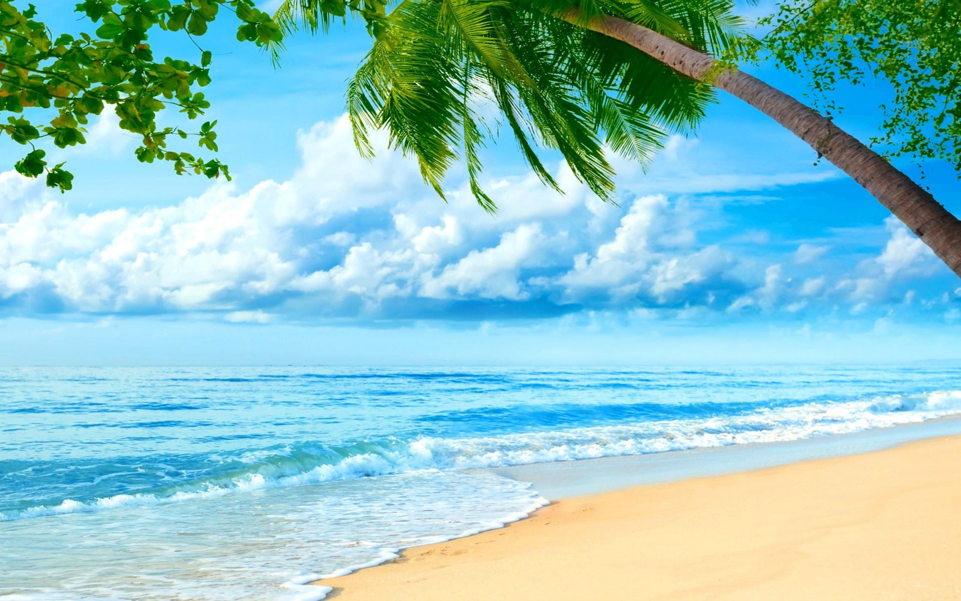 второй картинка море с пальмами большого разрешения пиджак, ботинки
