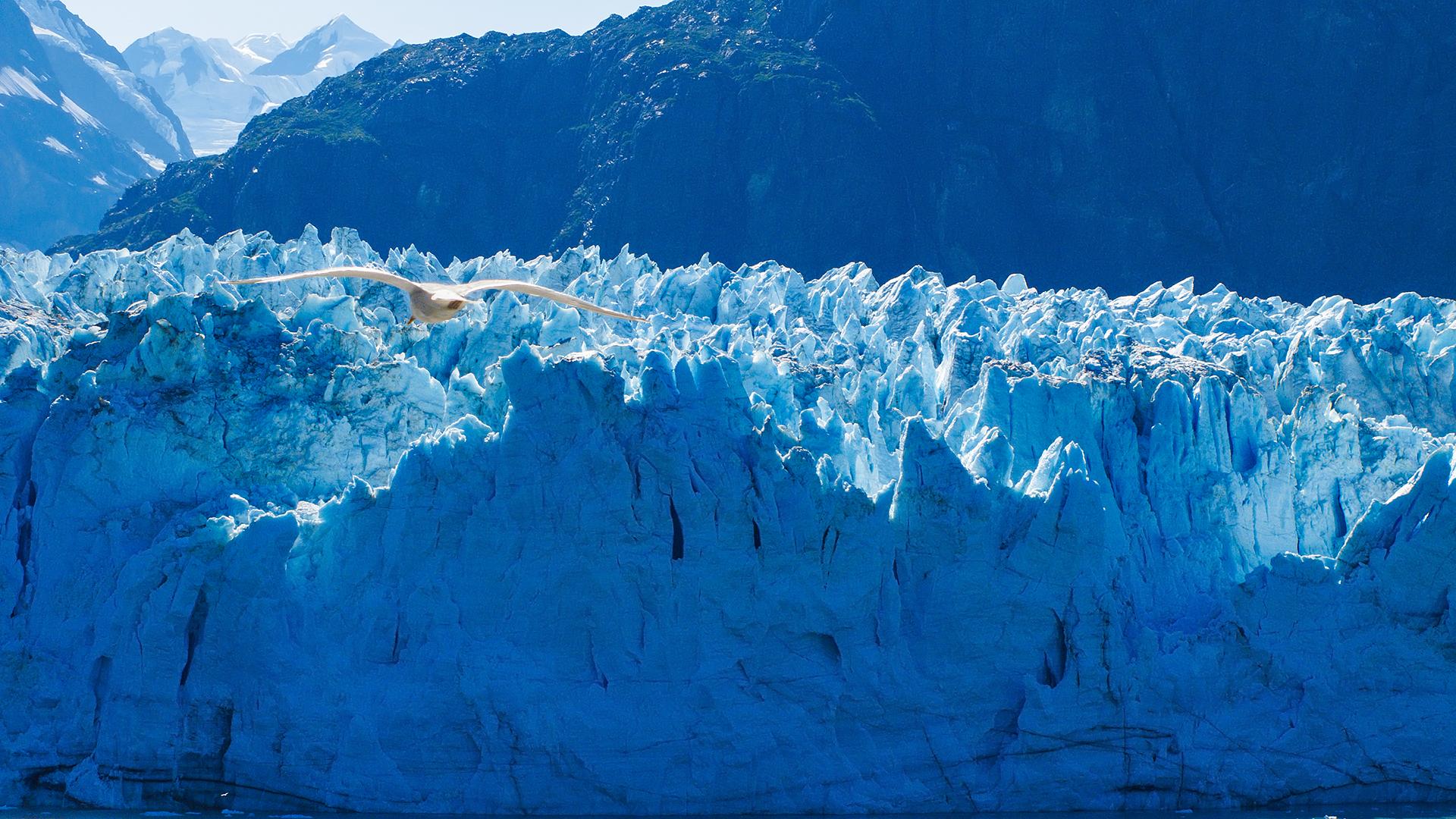 ледник айсберг цветы без смс