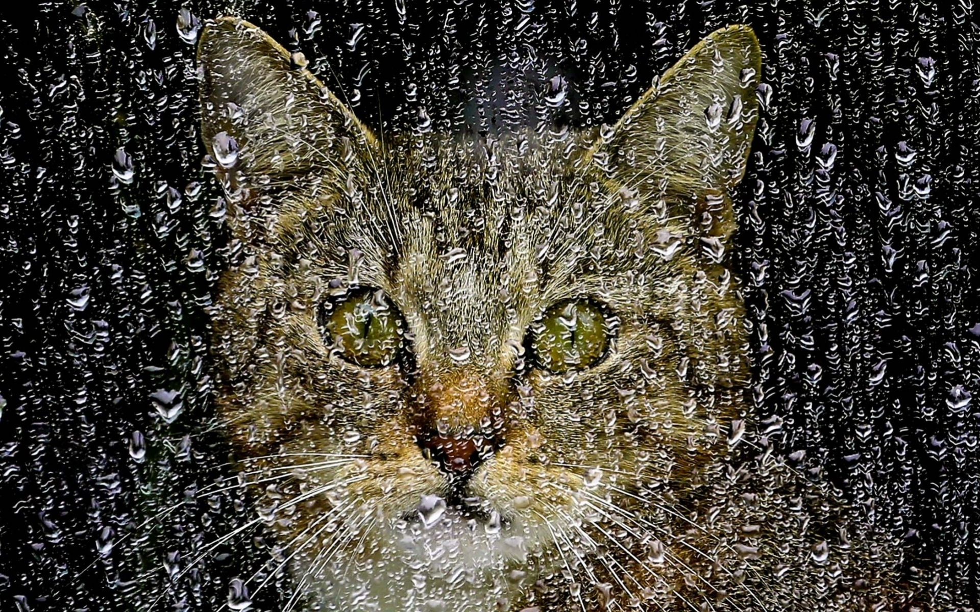 the cat in the rain Complete summary of ernest hemingway's cat in the rain enotes plot summaries cover all the significant action of cat in the rain.