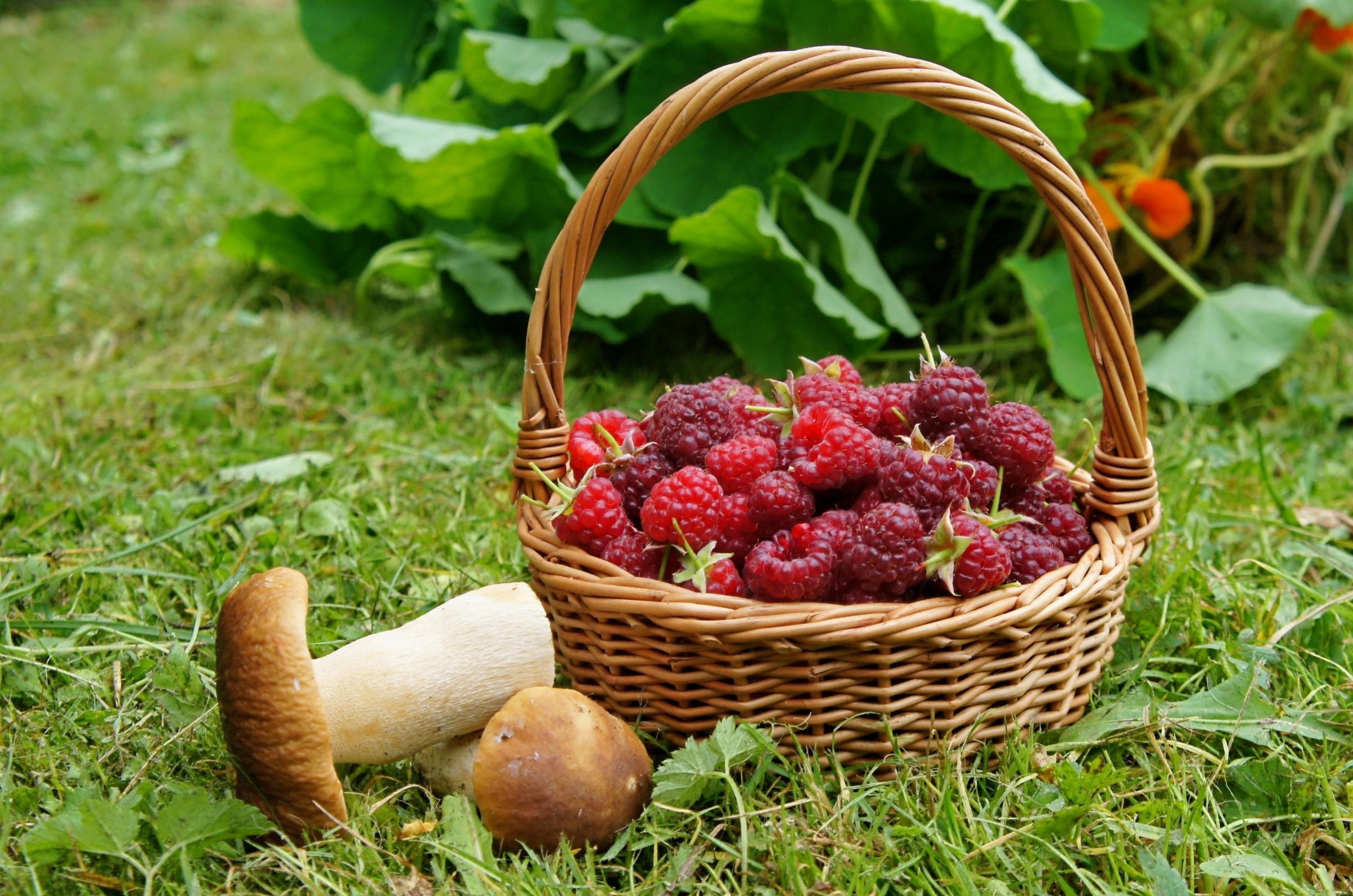 Подосиновики с ягодами в ведре скачать