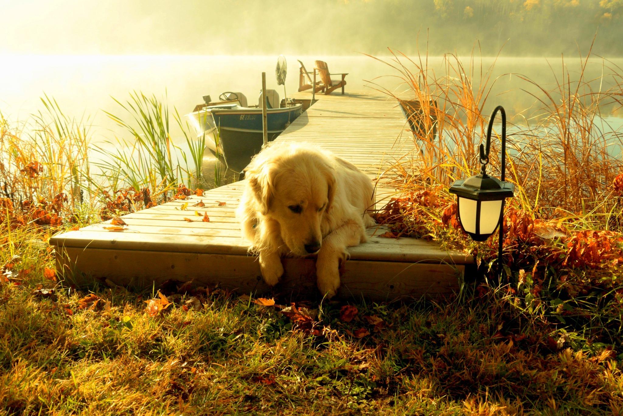 Собака на фоне заката  № 2038704 без смс