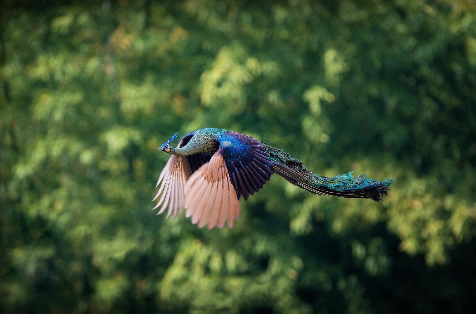 красота полета птицы фото оцените, какая это