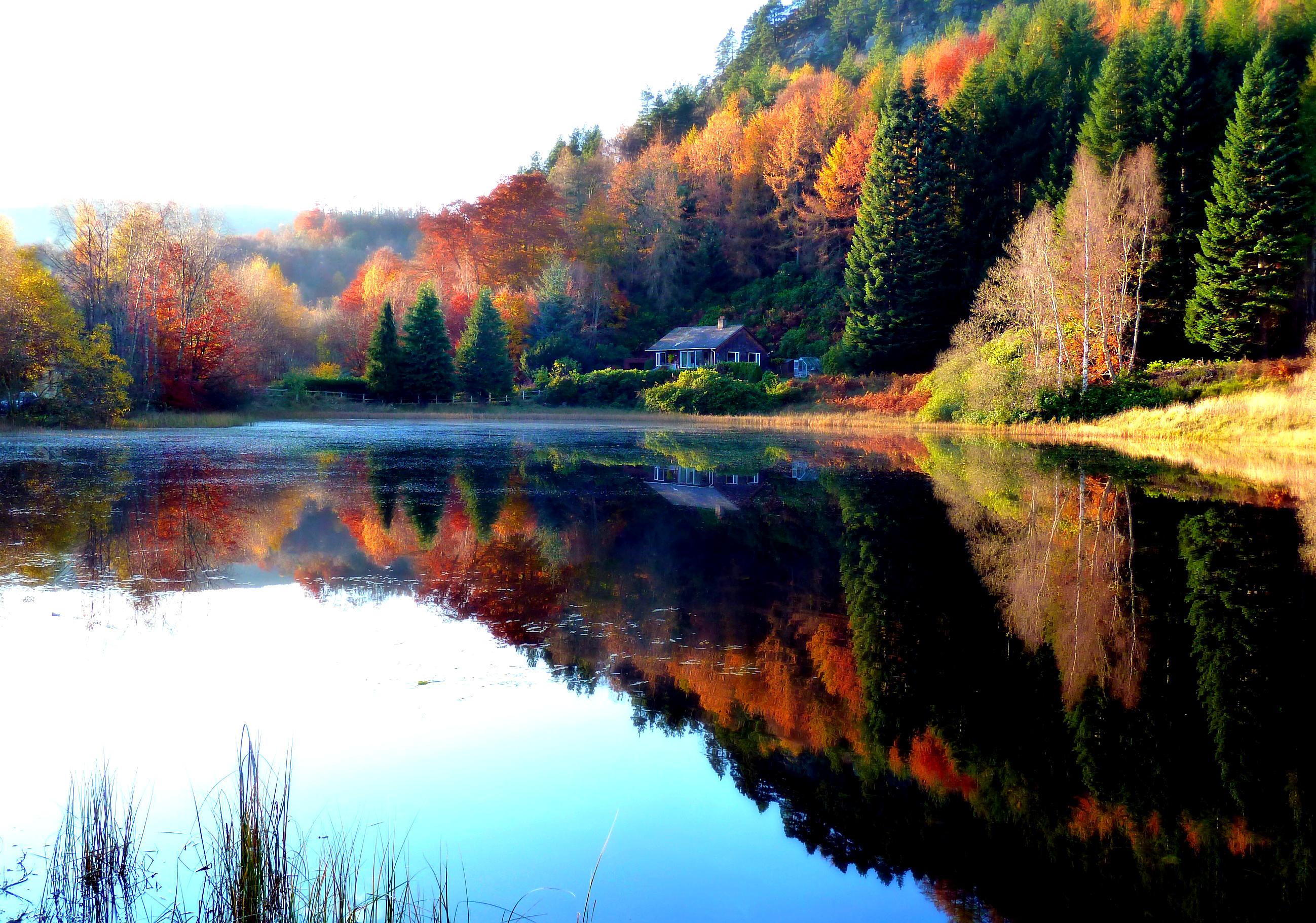 природа озеро дом лес деревья  № 2447913 загрузить