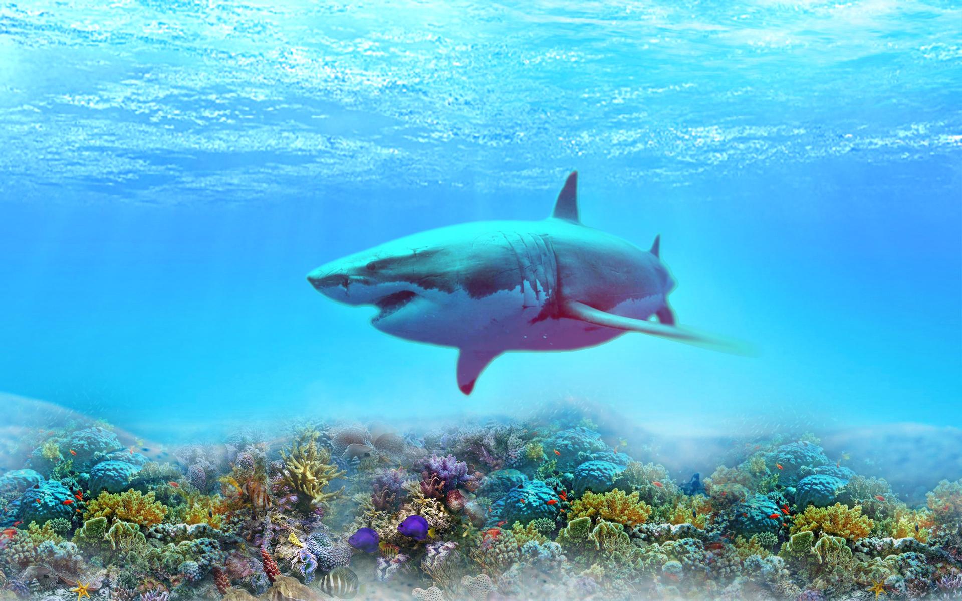 картинки обои для стен море акул начались