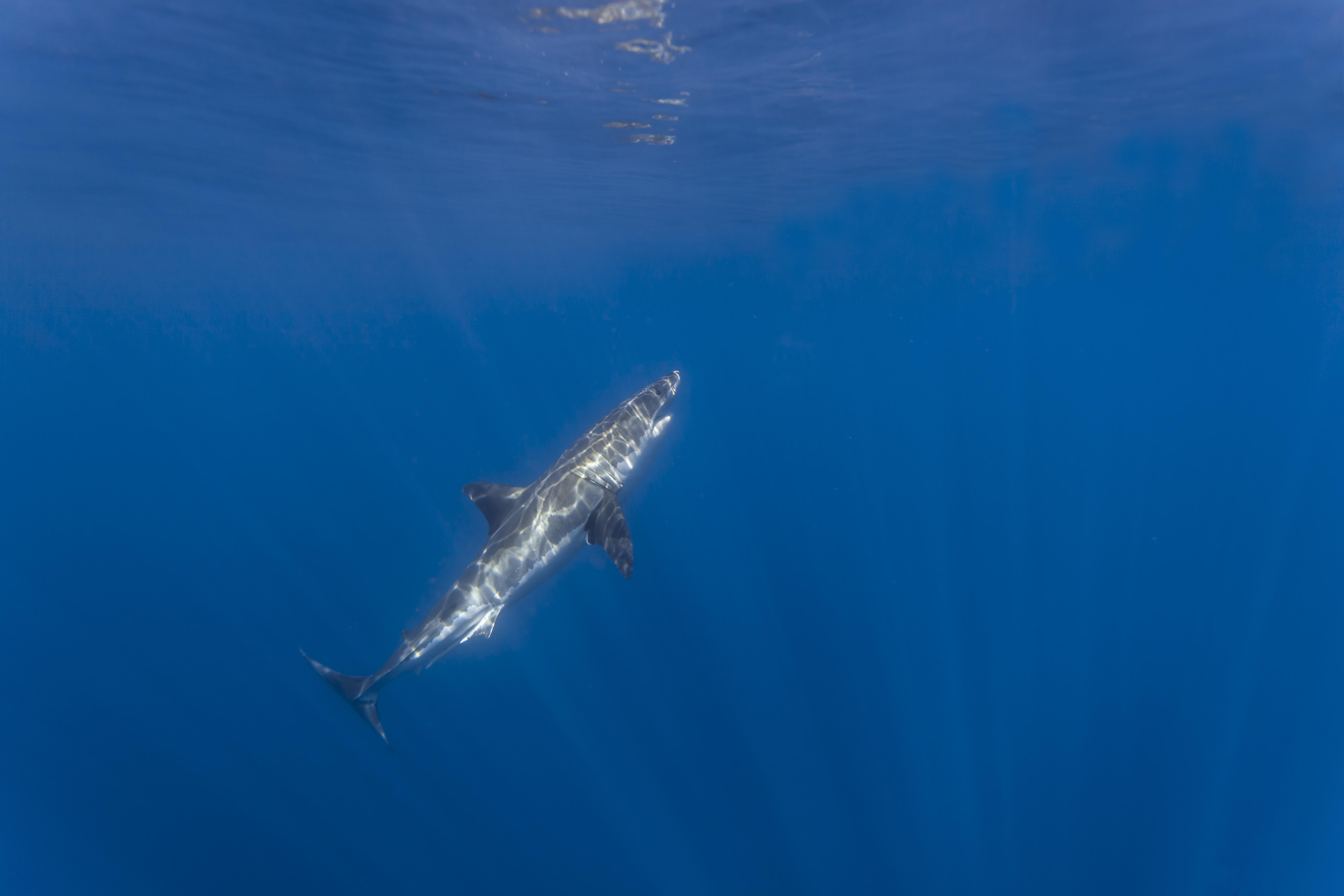 2560x1600 ocean sharks - photo #18