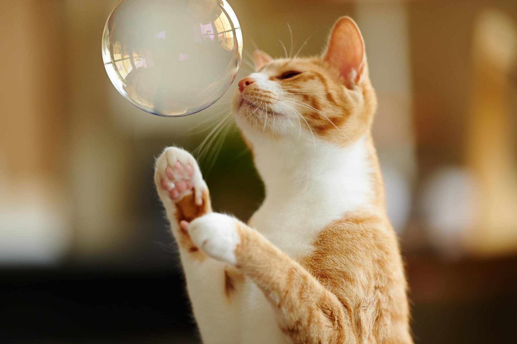 Кот с зеркалом  № 1689818 бесплатно