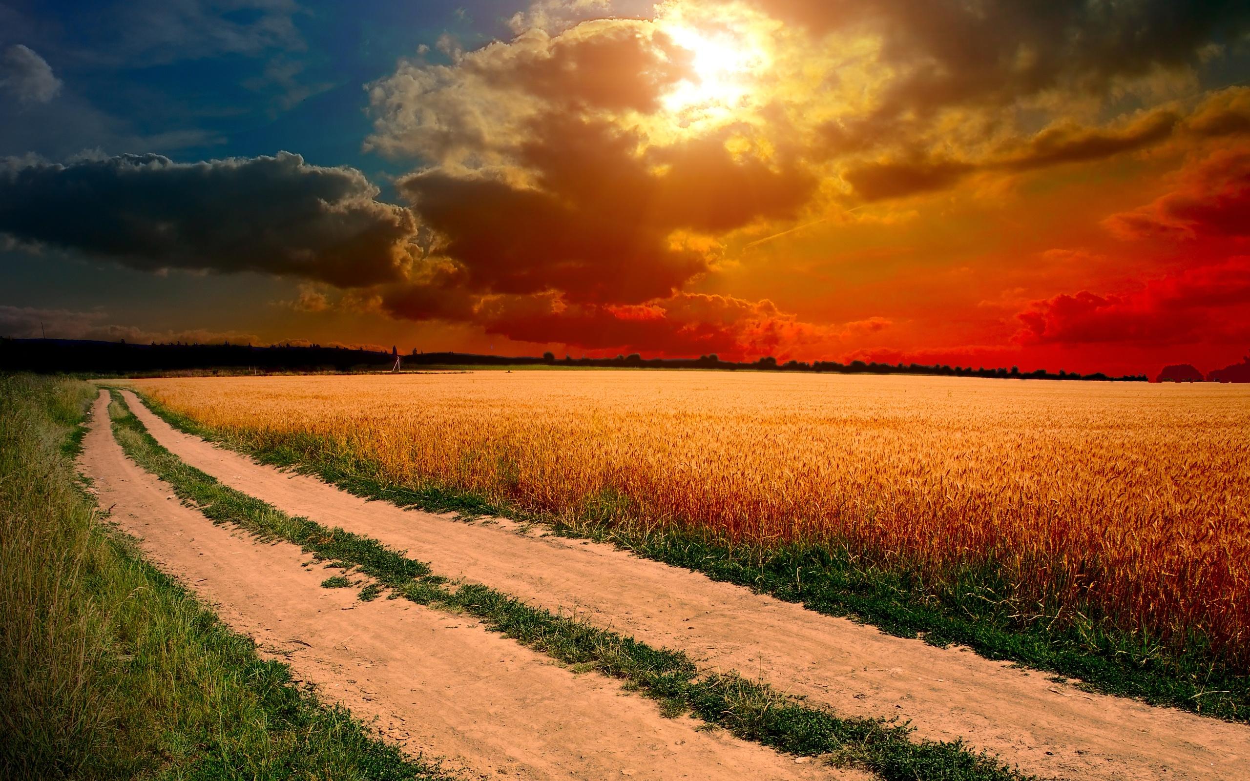 поле желтое закат  № 680812  скачать
