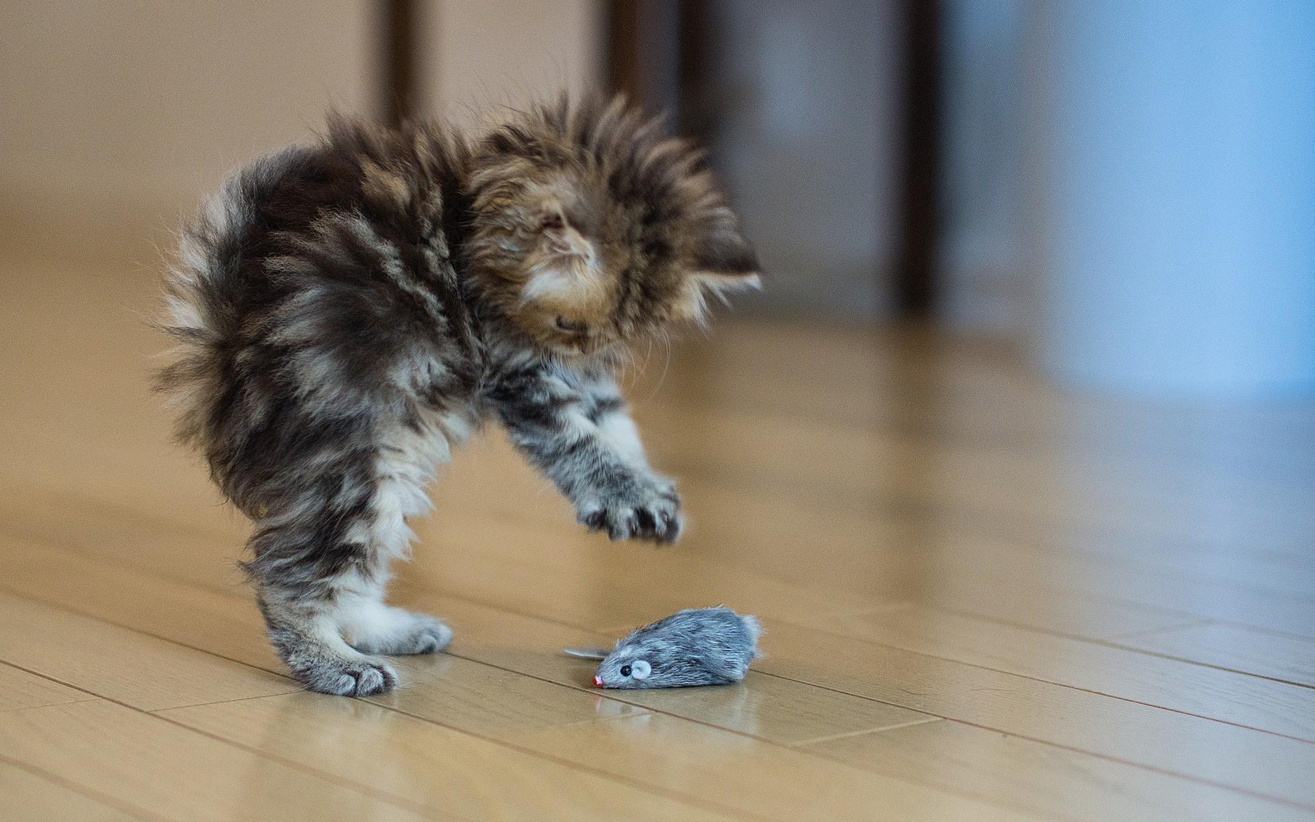 Прикольные картинки кошки и котята, ручной работы