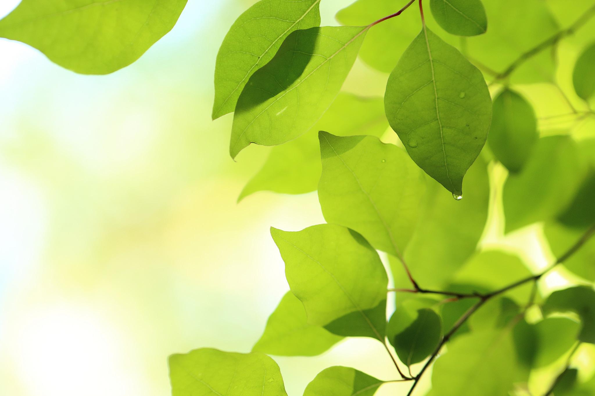 природа лист зеленый фон осень ветка скачать