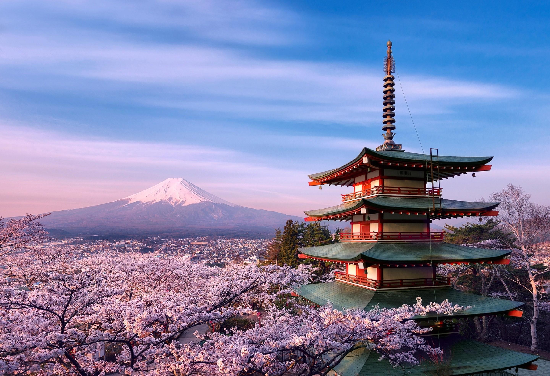 Замок Осака Япония сакура  № 3700730  скачать
