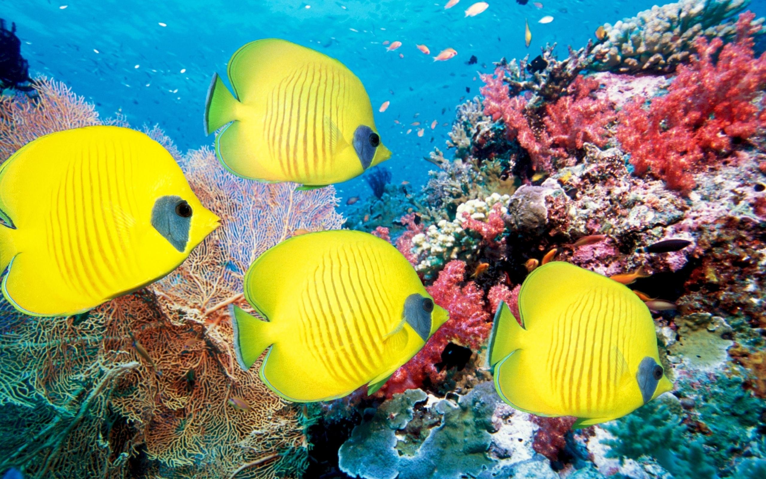 аквариум рыбы кораллы макро бесплатно