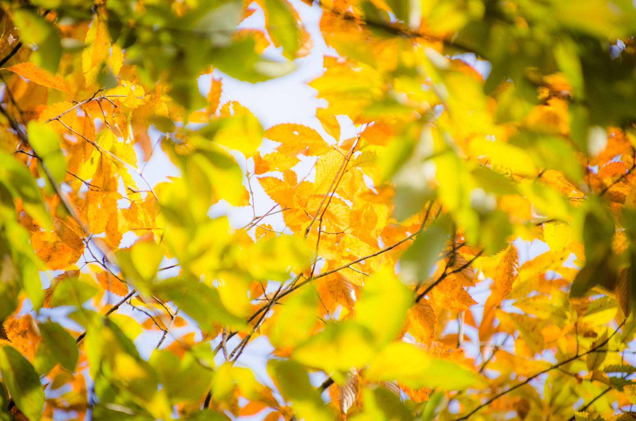 ветка осень листья бесплатно