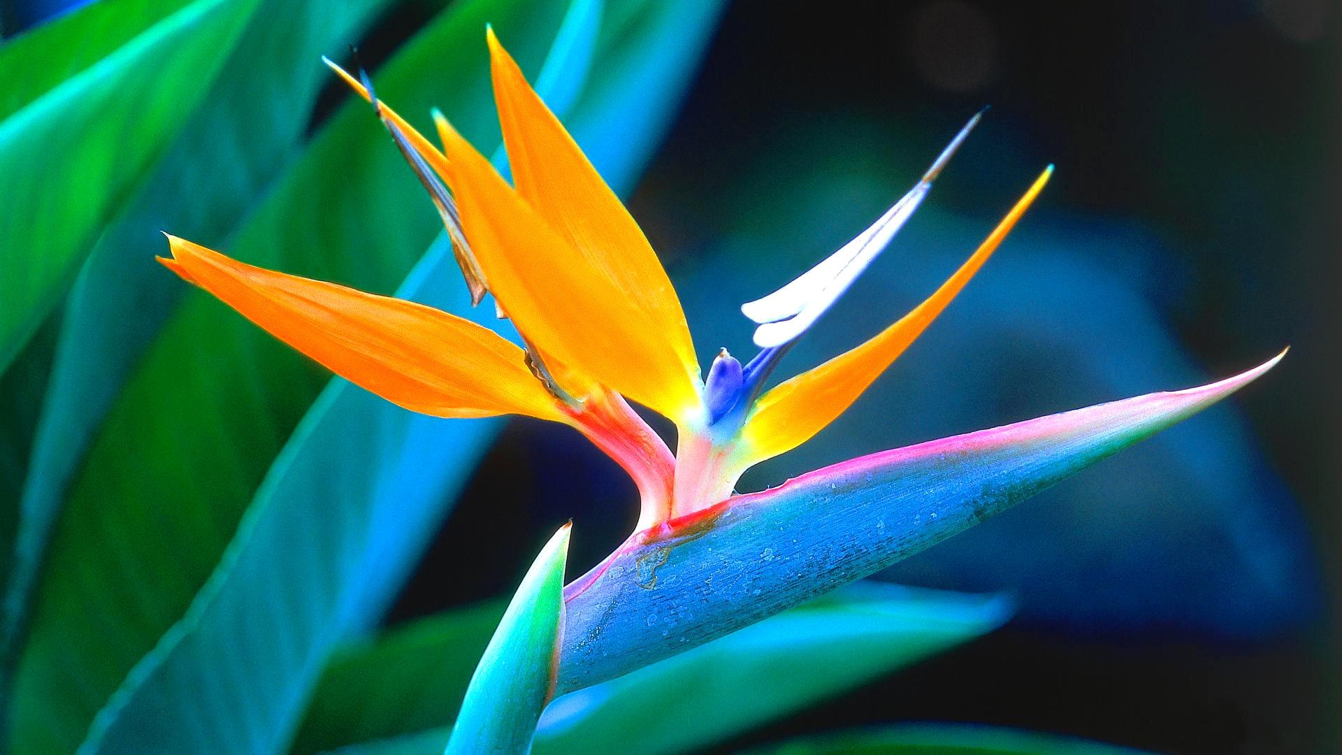 Необыкновенные цветы картинки, рулем приколы картинки