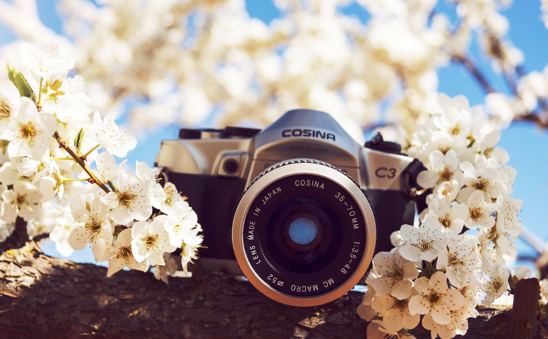 фотоаппарат сирень трава  № 3400776 бесплатно