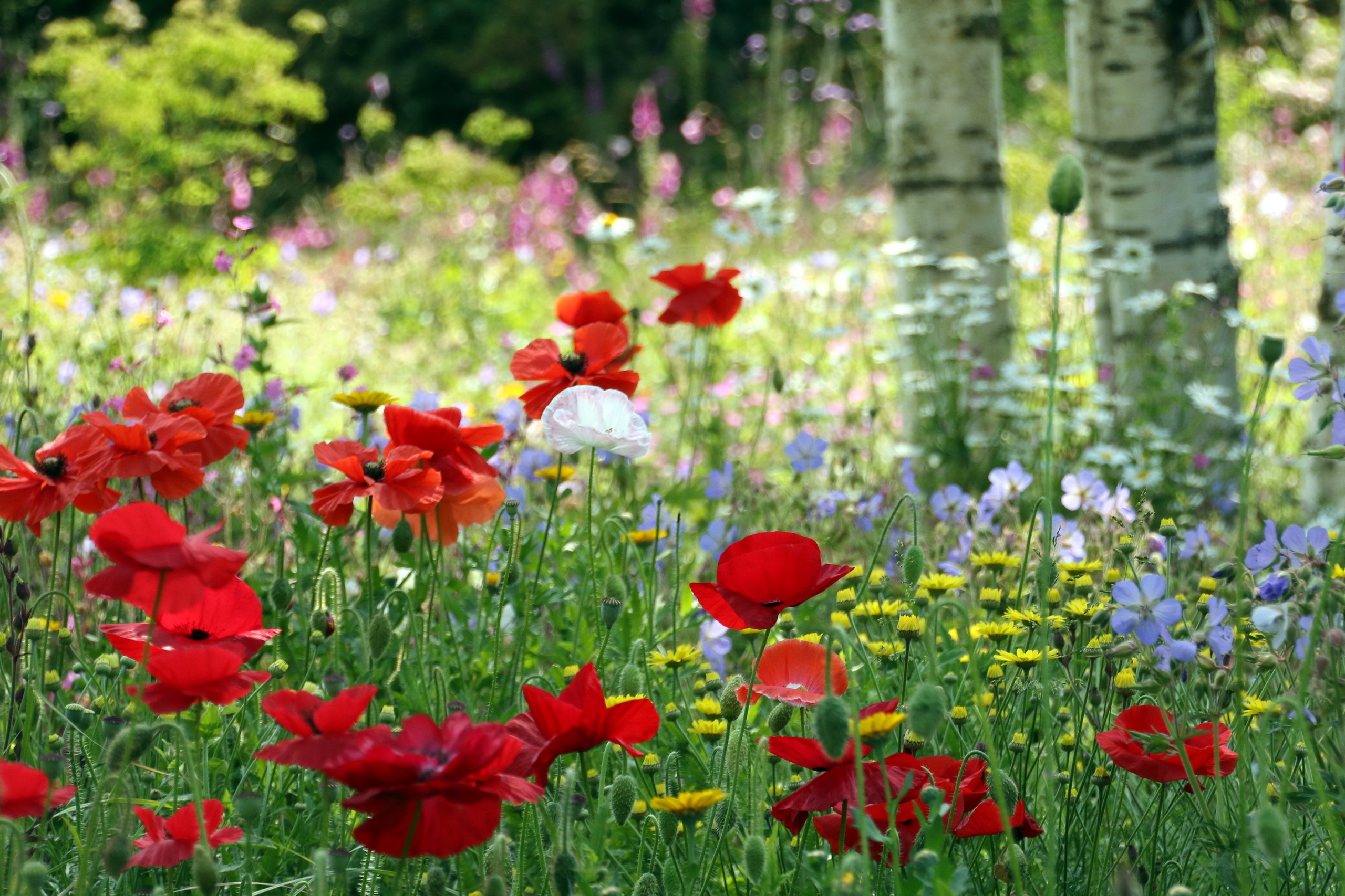 Обои для рабочего стола цветочная поляна