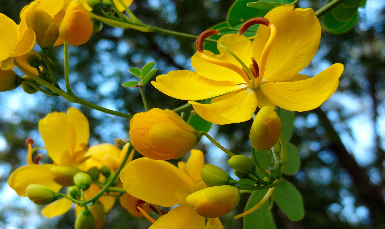Желтый распустившийся цветок  № 731653 без смс