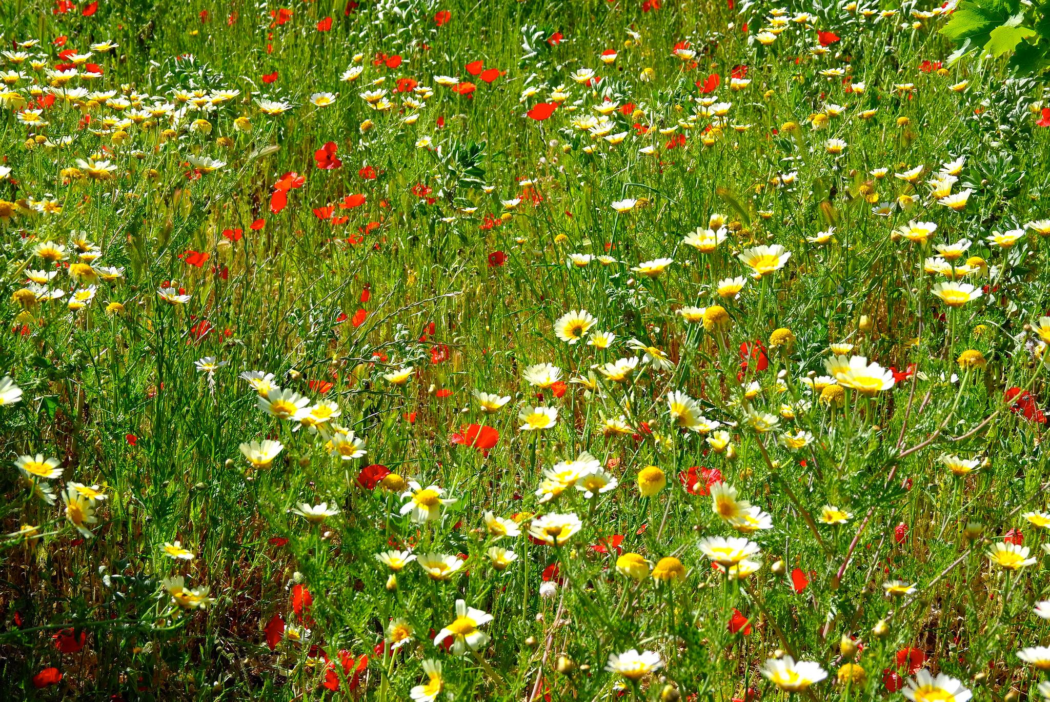Трава цветы поле луг без смс