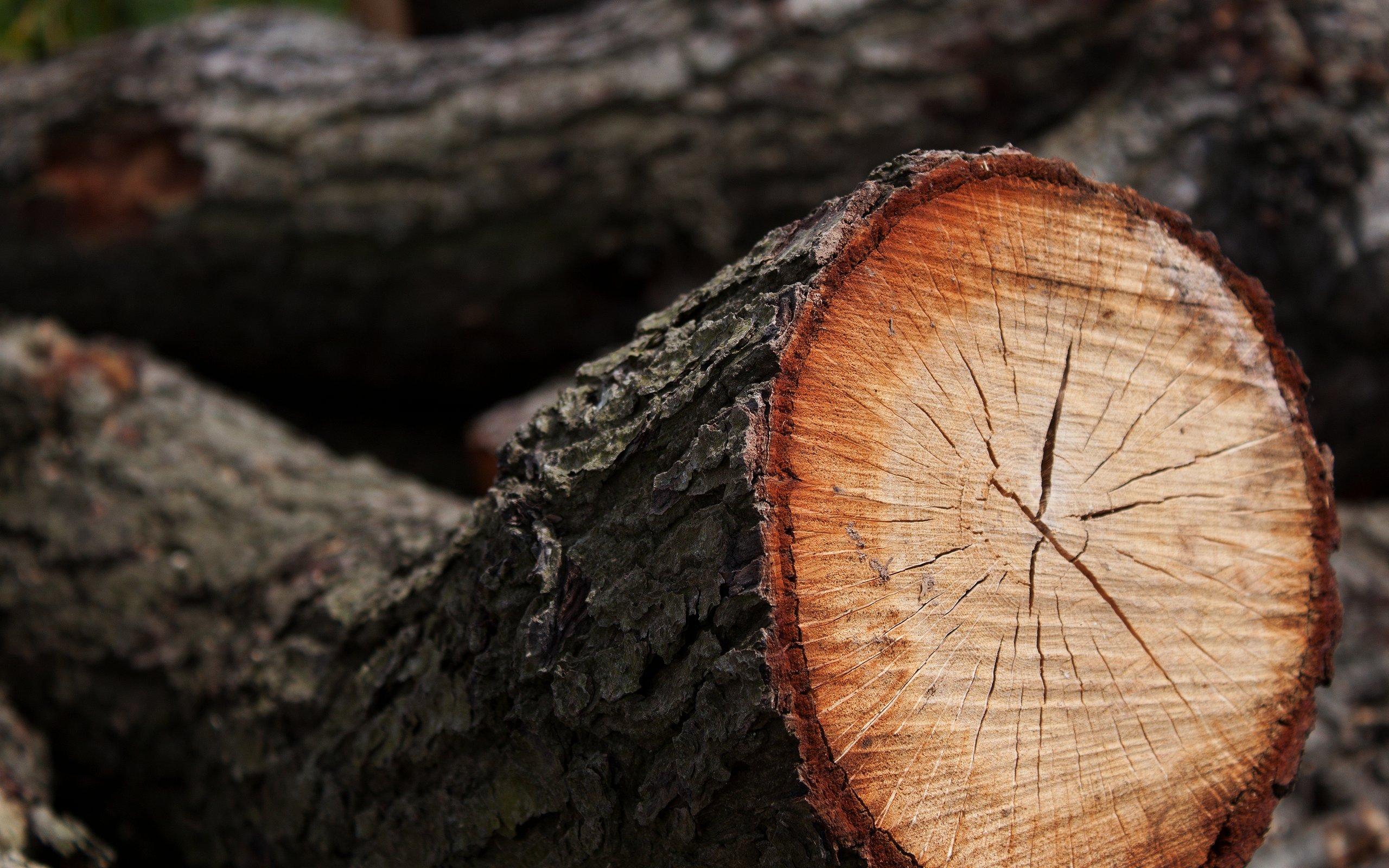 Срезанное дерево скачать