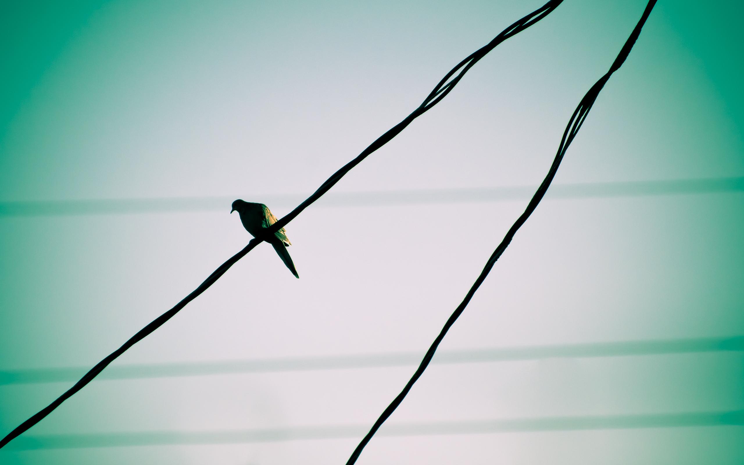 гифка птички на проводе которые часто отдают