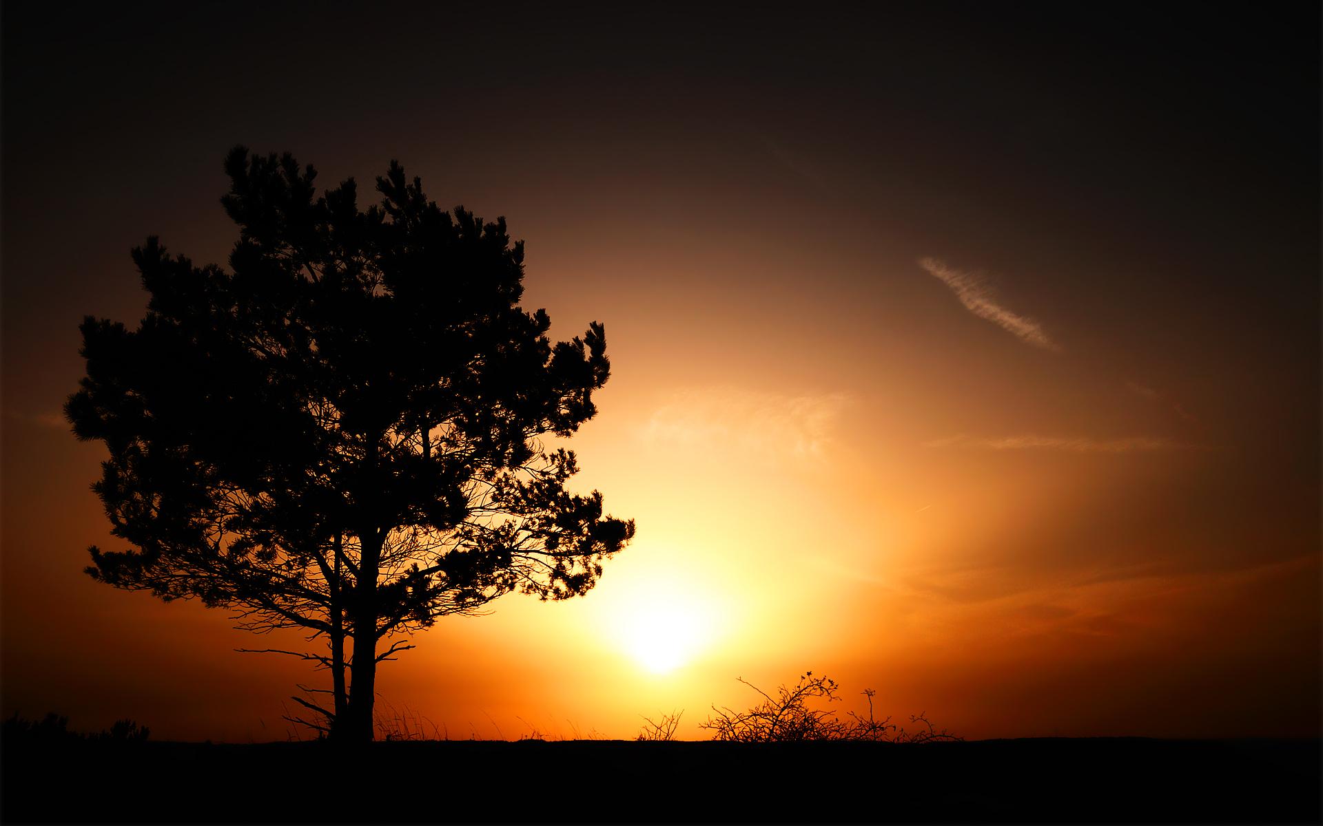 природа закат солнце деревья загрузить