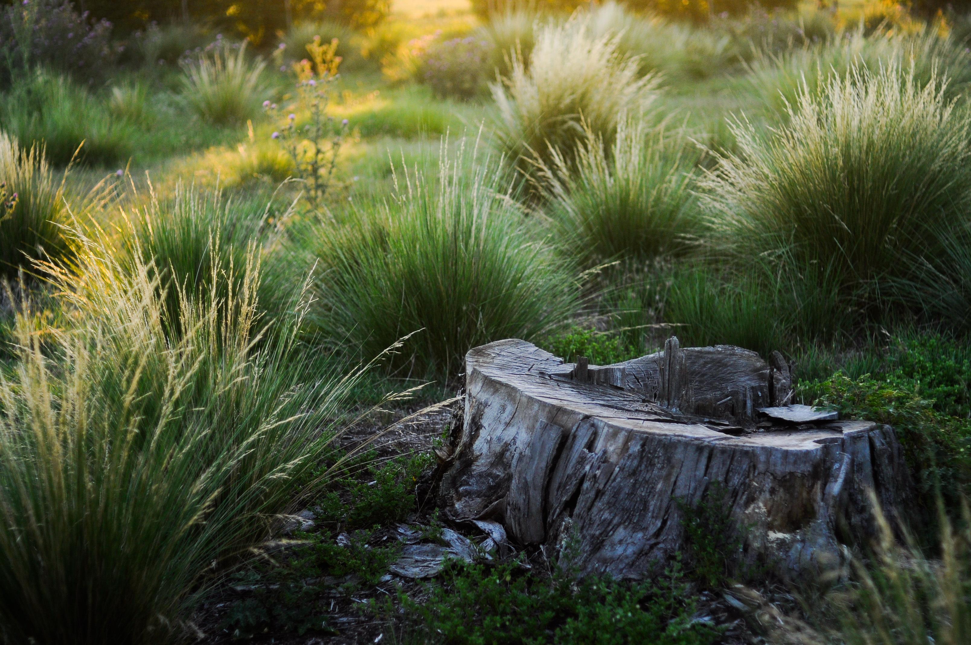 природа мох лестница трава деревья скачать