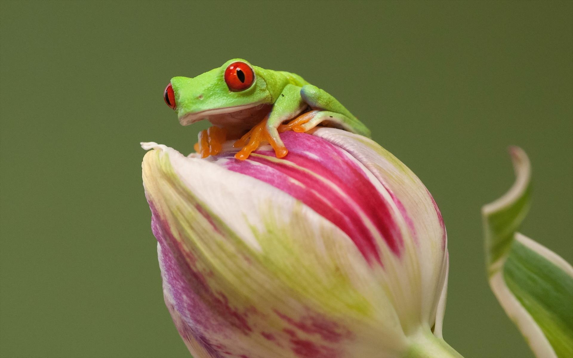 природа цветы животное лягушка  № 3068589 без смс