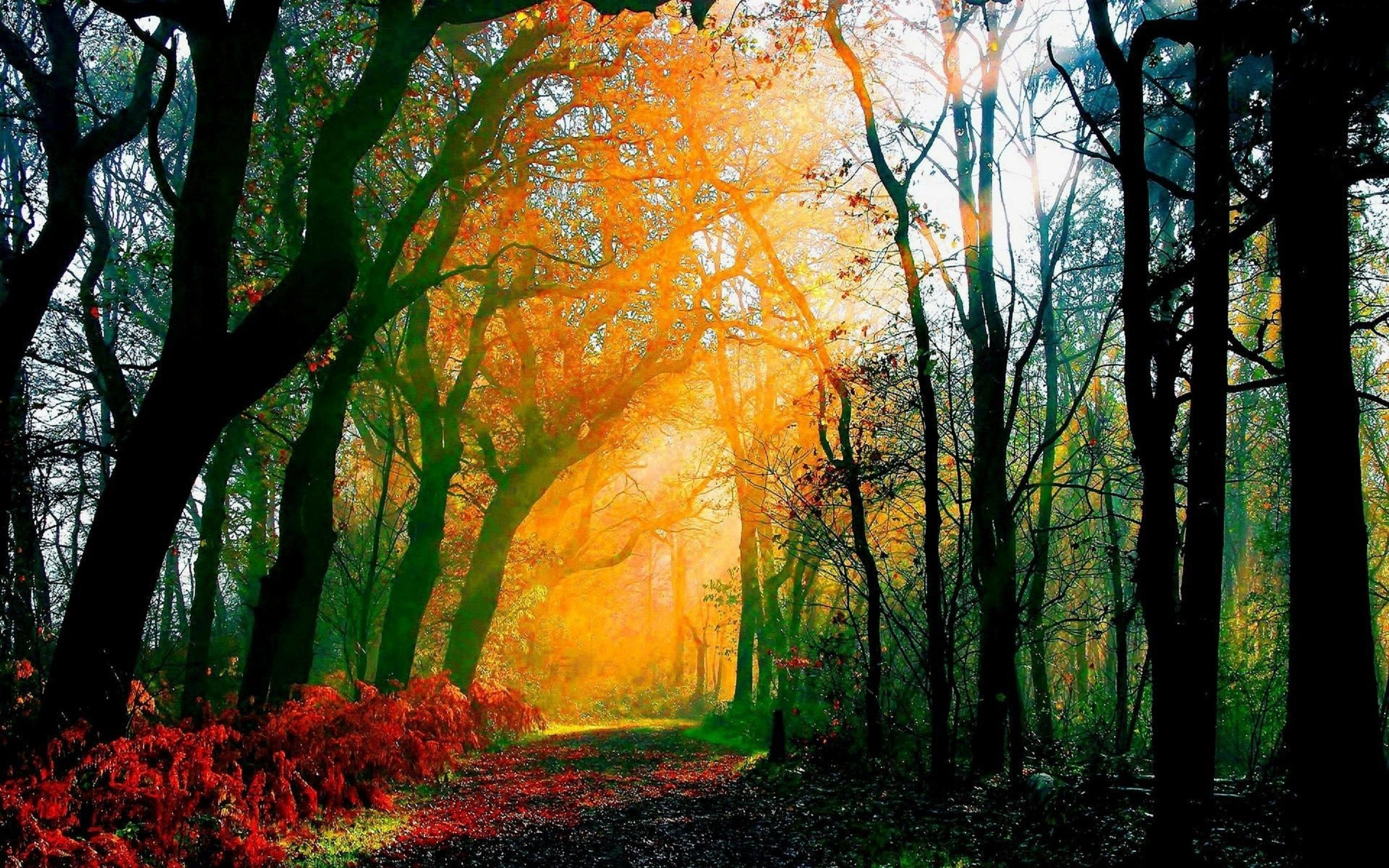 Дождь в лесу обои и картинки